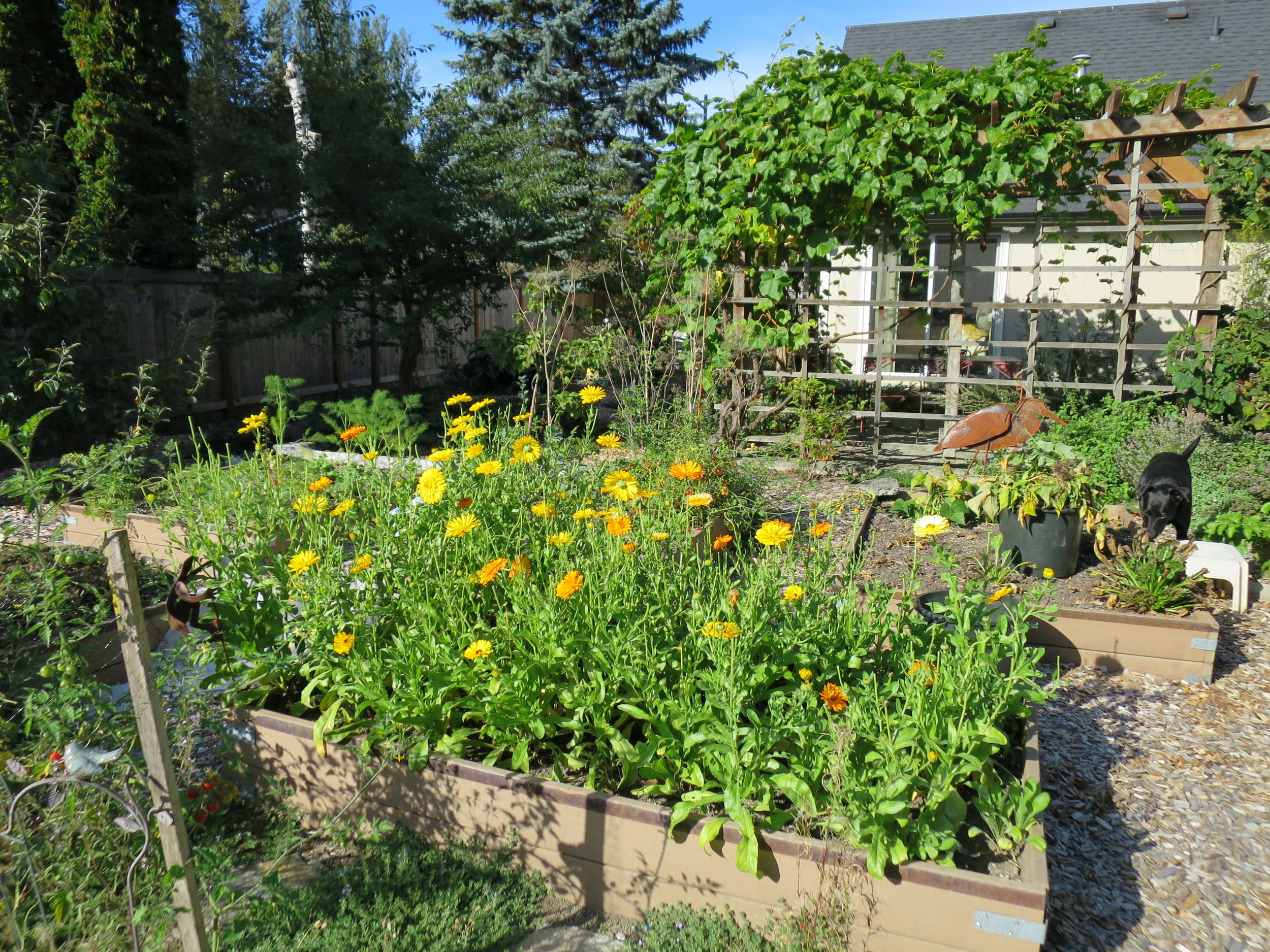 Lots of raised beds