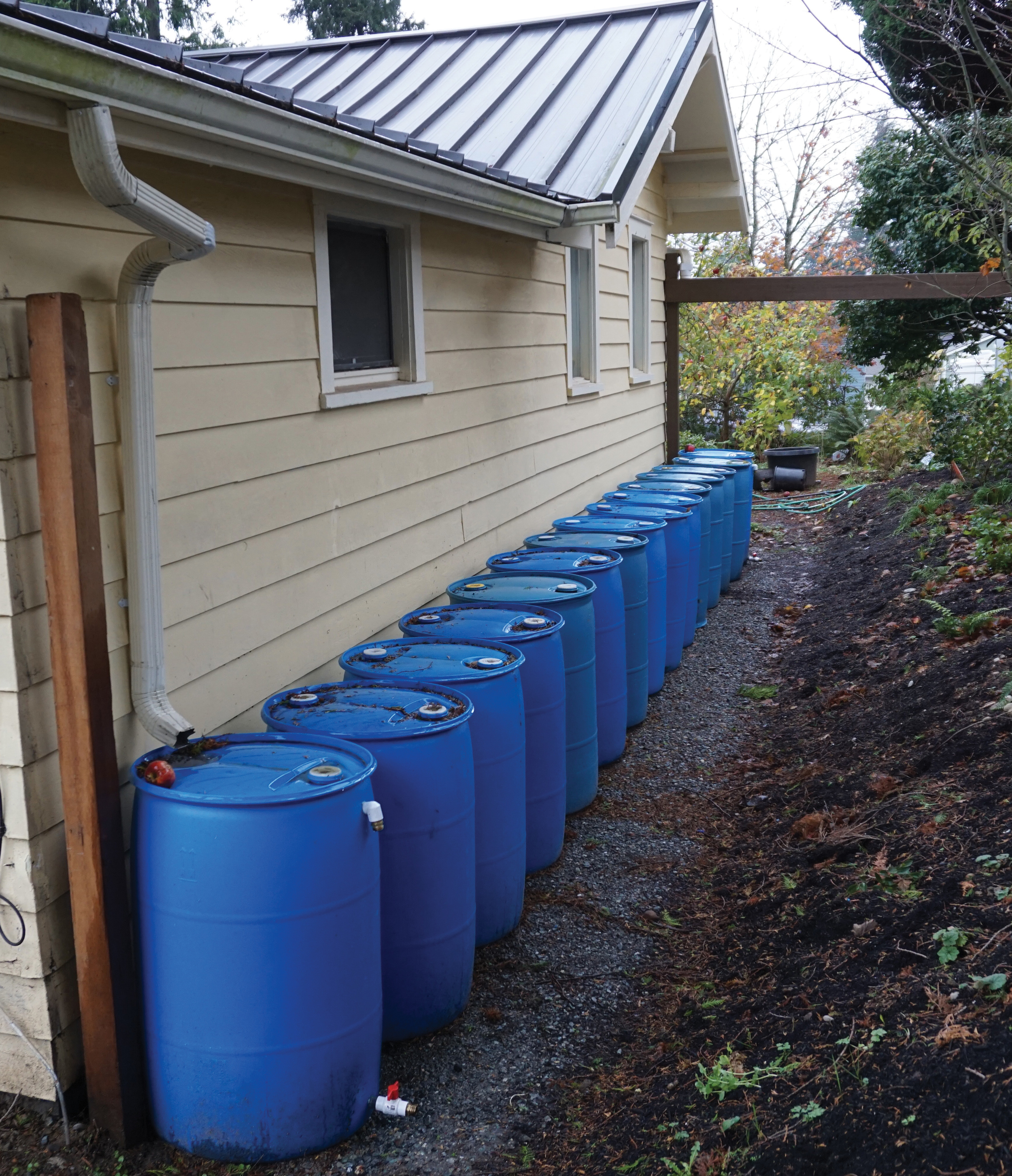 Fifteen rain barrels line the side of the Martinez-McCullough home in Everett.