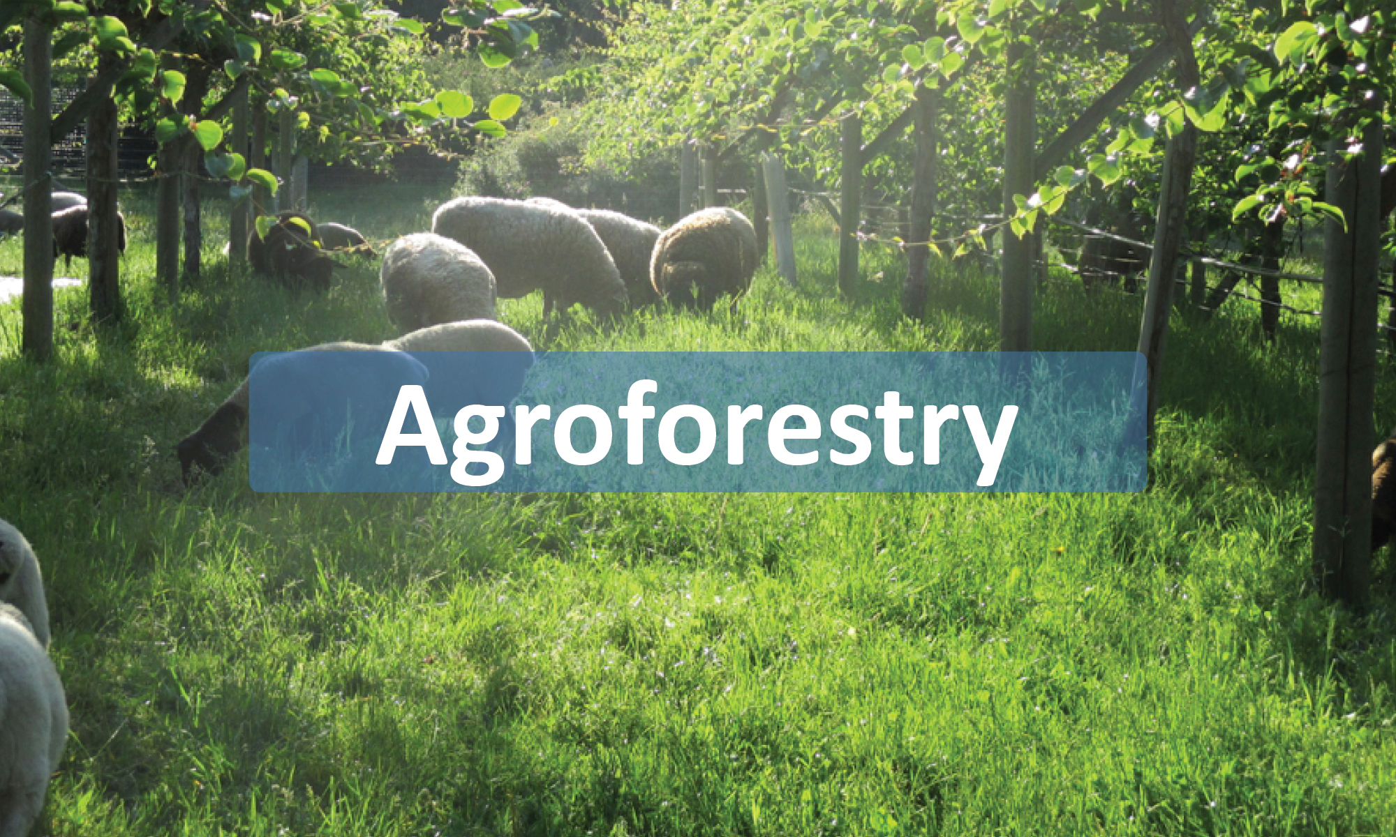Agroforestry page button