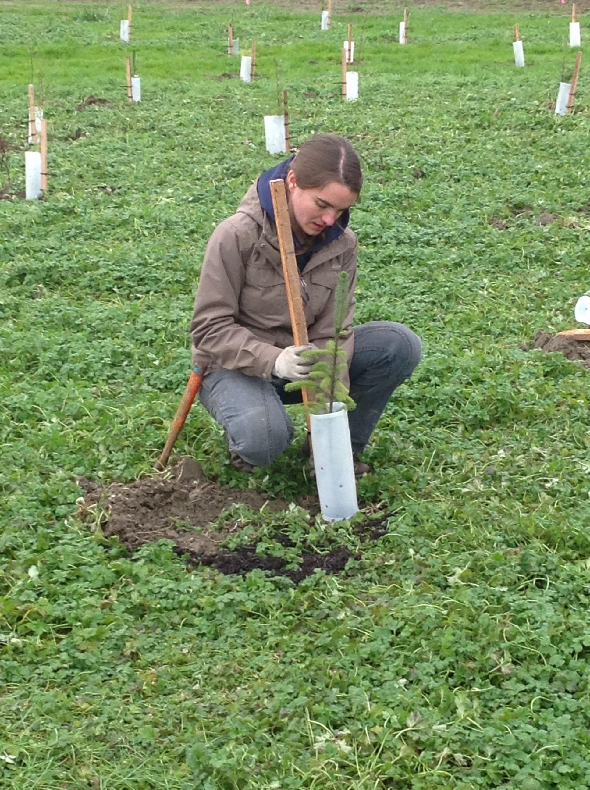 Roxanne planting a tree