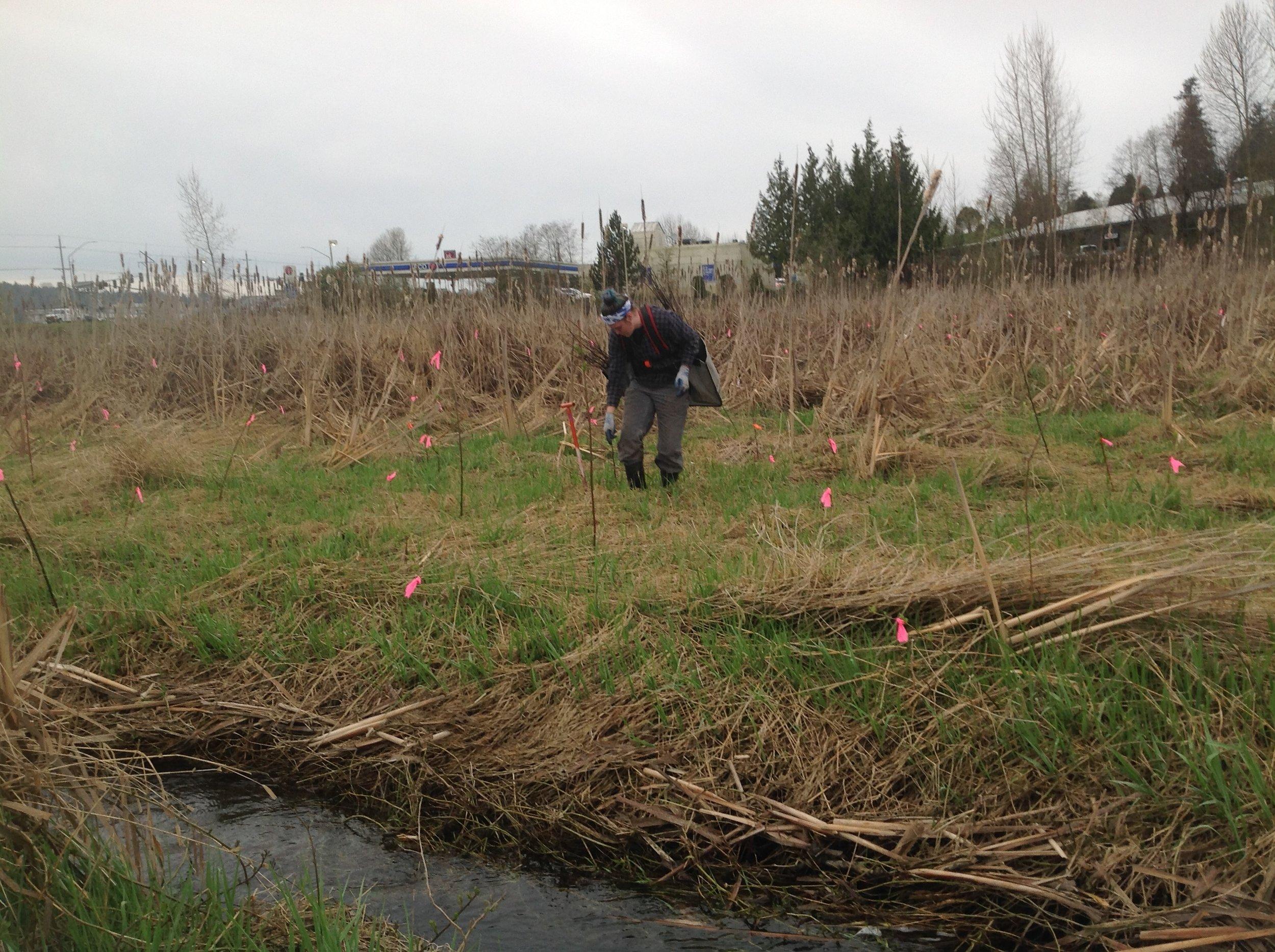 Monroe wetland project