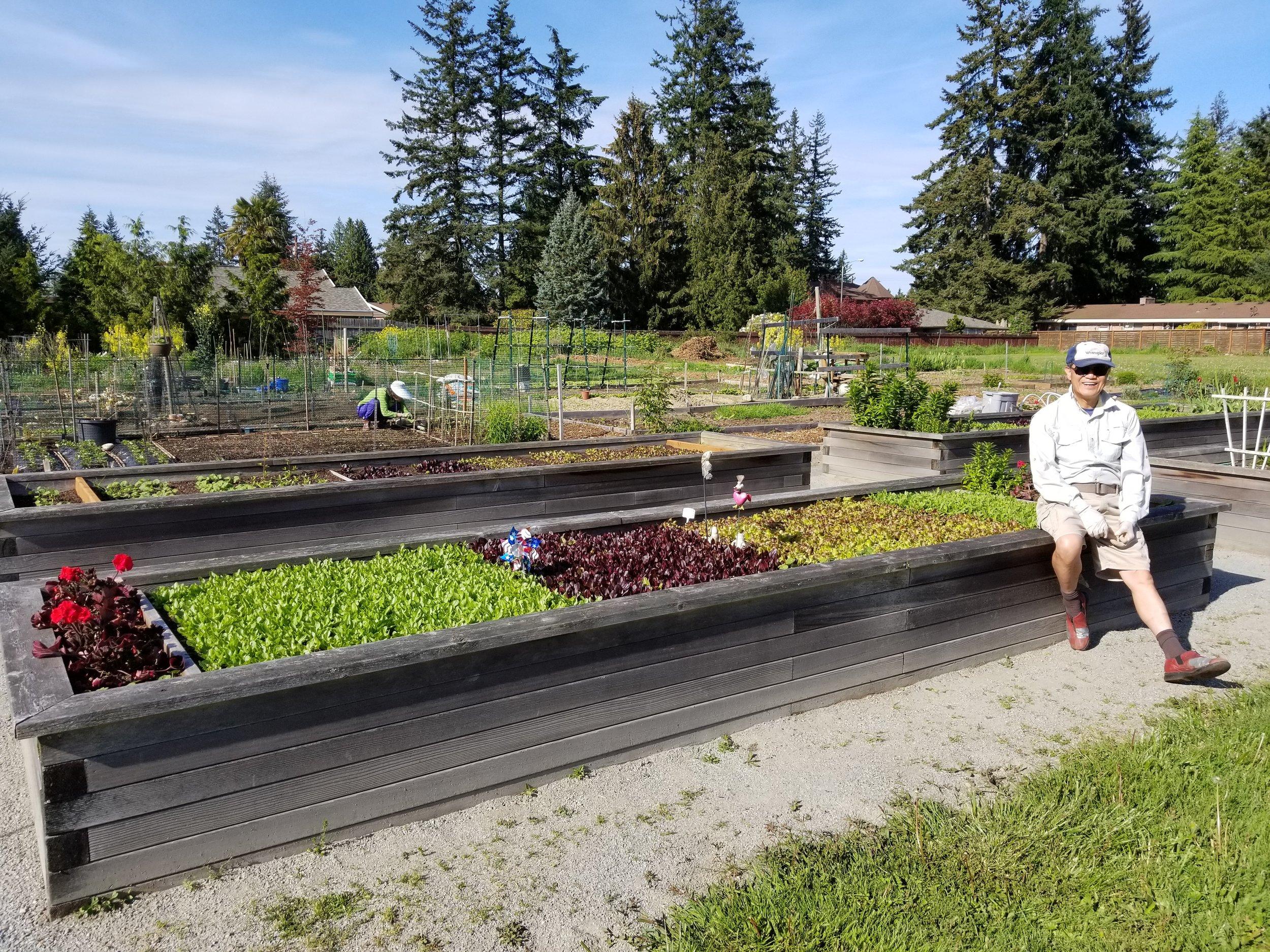 Lawns to Lettuce