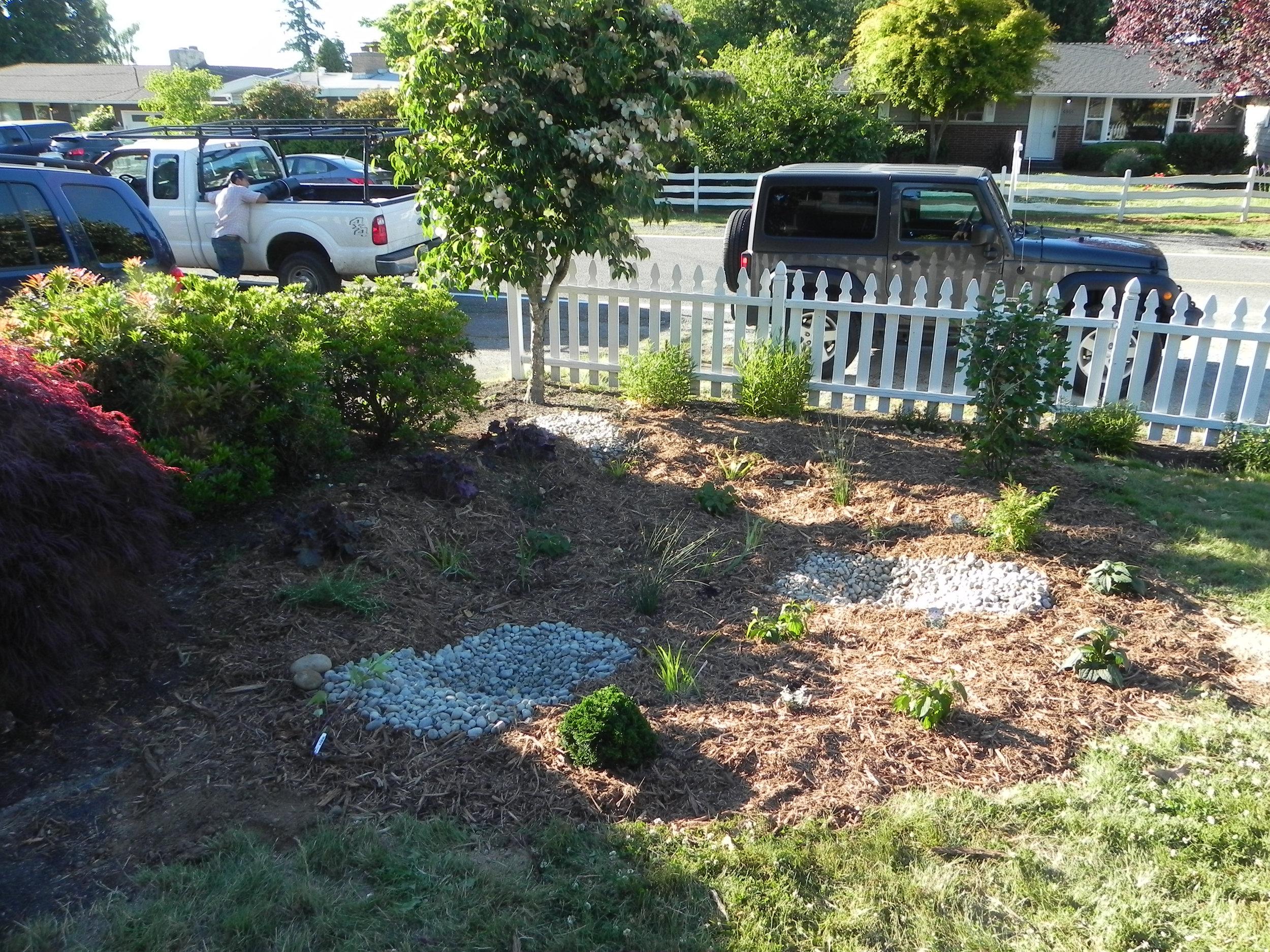 Lynnwood-WCC-Planting-0527-PLANTED.jpg