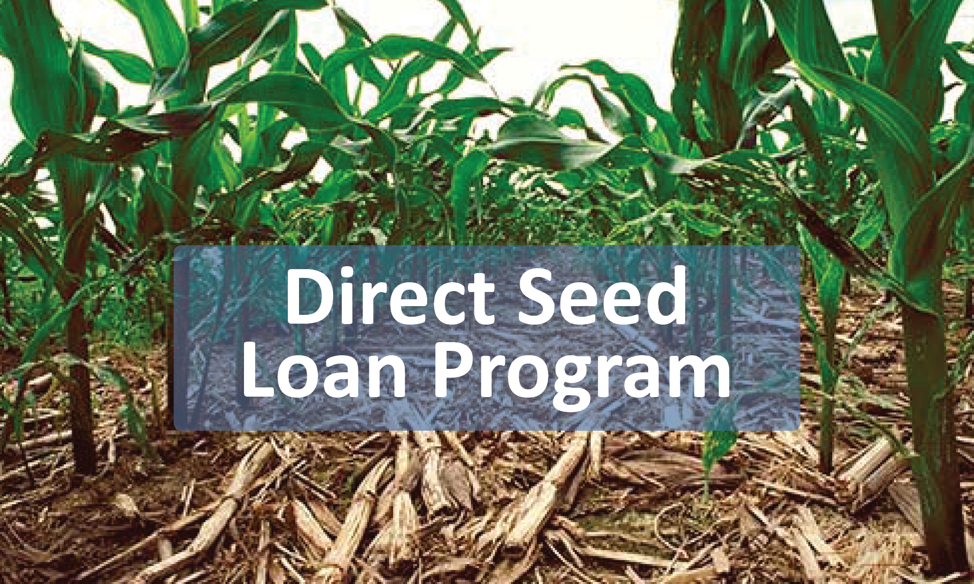 Direct Seed Loan Program Button