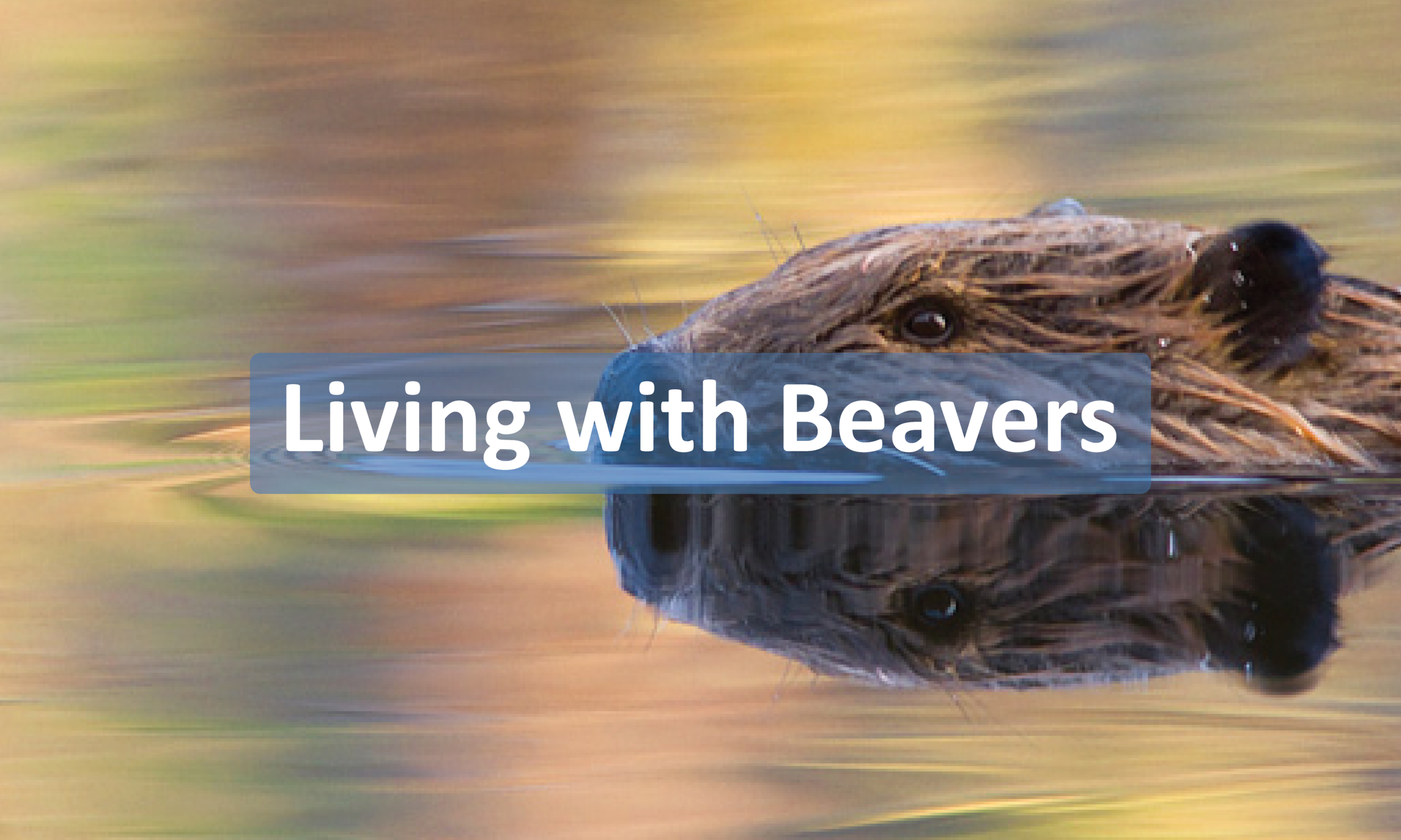 LivingwithBeavers-button.png
