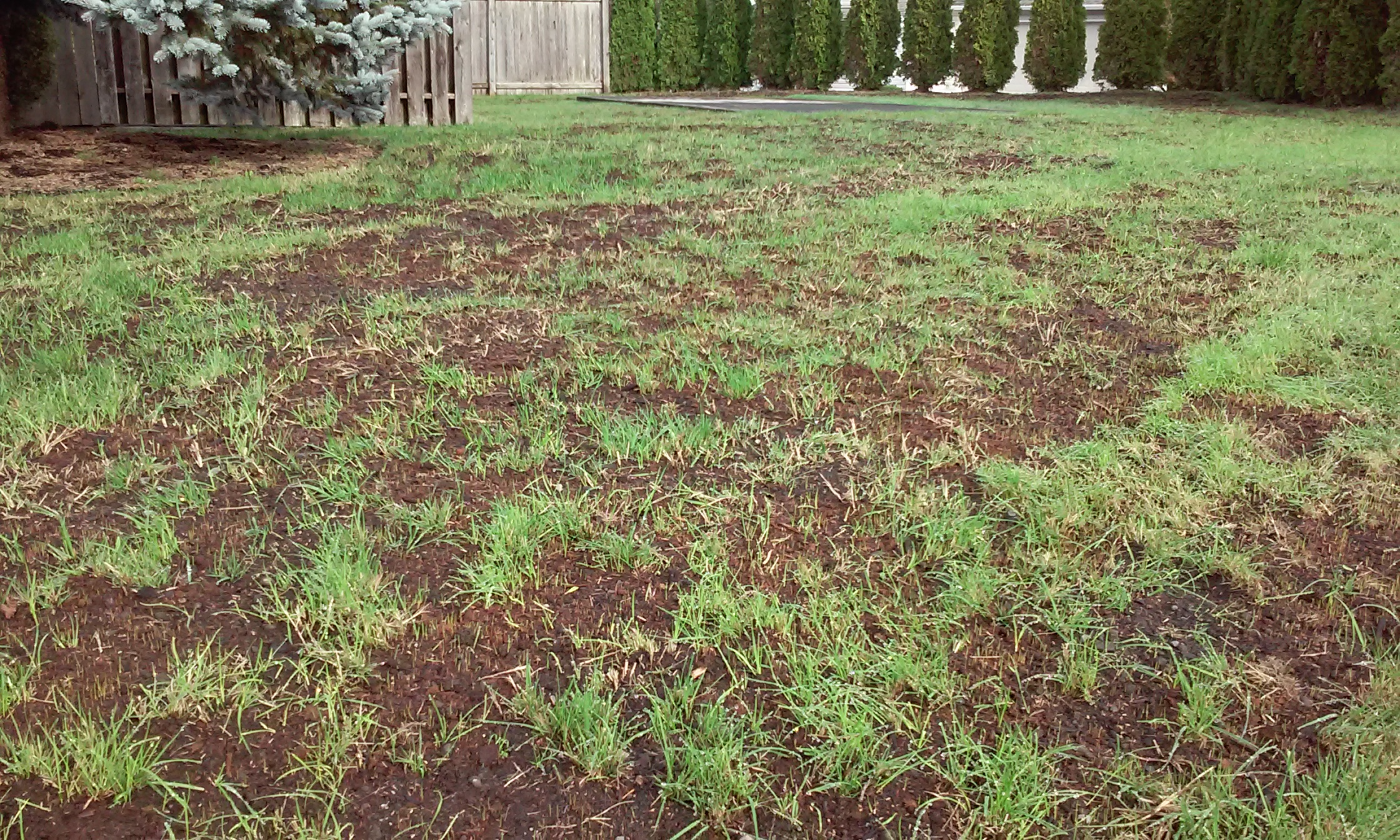 Fall Lawn Care_Compost and Reseed.jpg