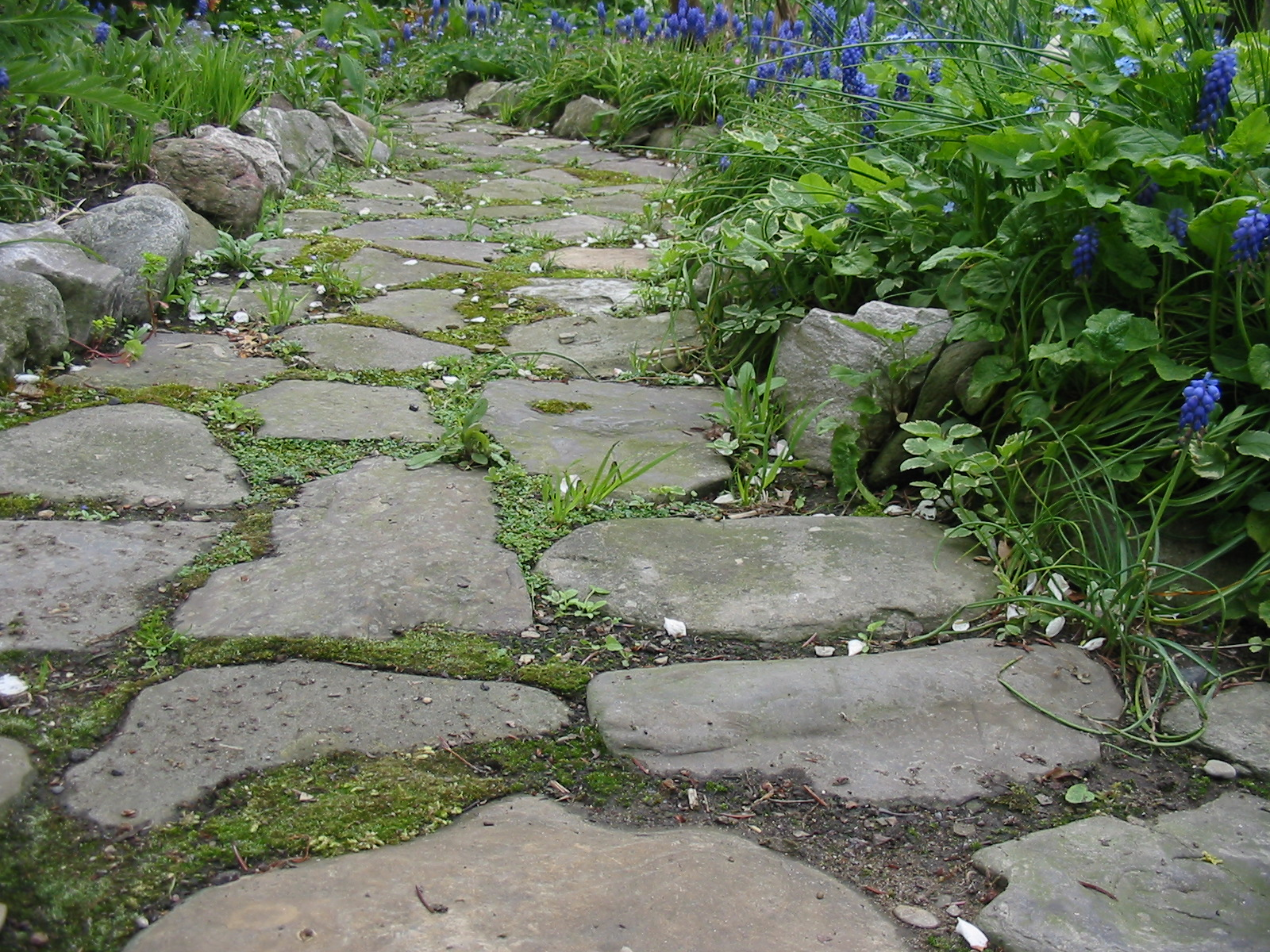 reducing lawn or permeable paths.jpg