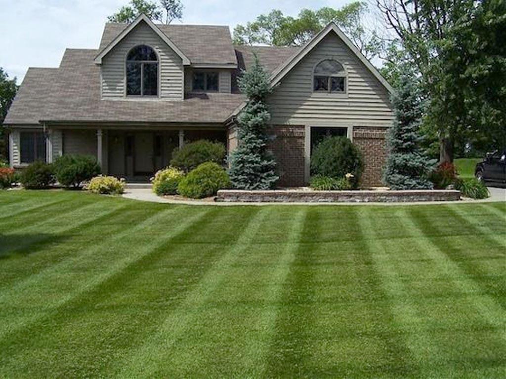 Patera-Landscaping-lawn.jpg