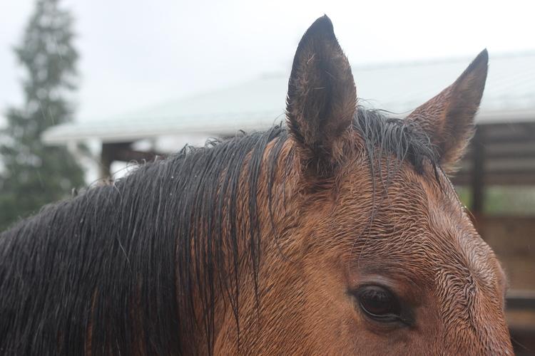 wet-horse.jpg