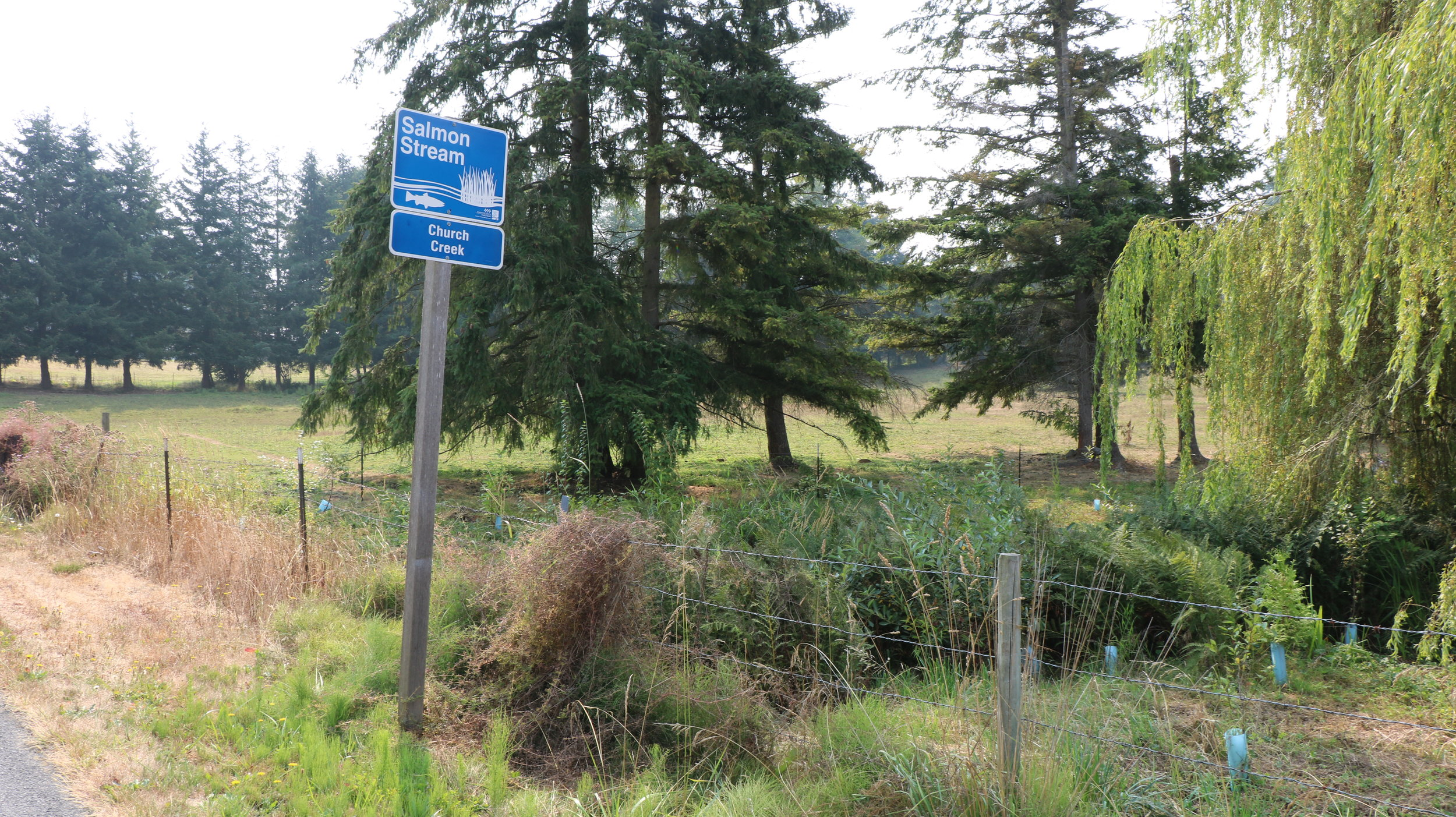 Salmon Stream sign next to the riparian buffer and exclusion fencing on Bill's property.
