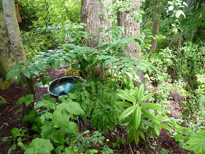 Layered plants in a natural setting help collect rainwater and protect soil from erosion. Courtesy of Innovative Landscape Technology.