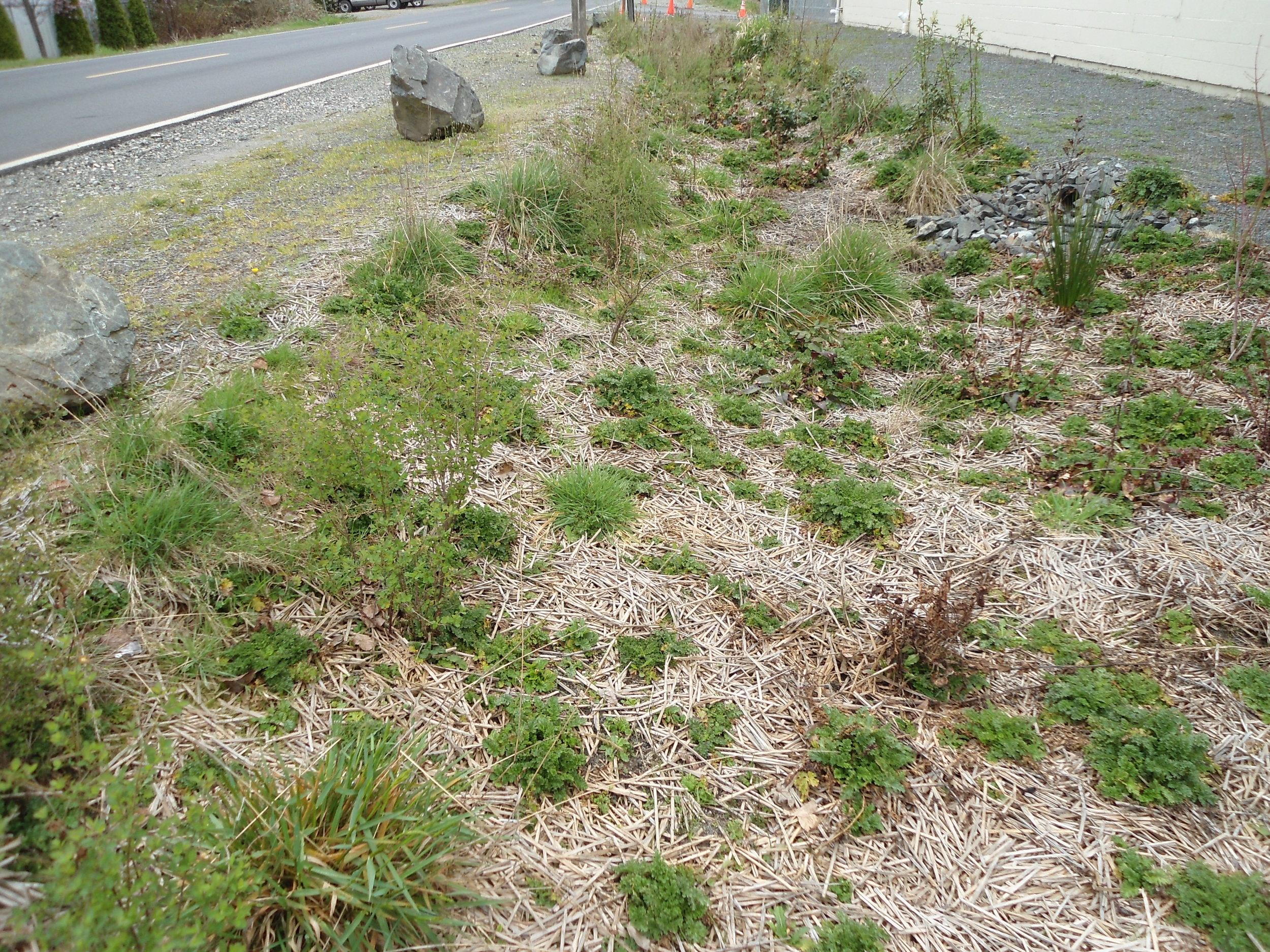 Insufficient Plant Coverage