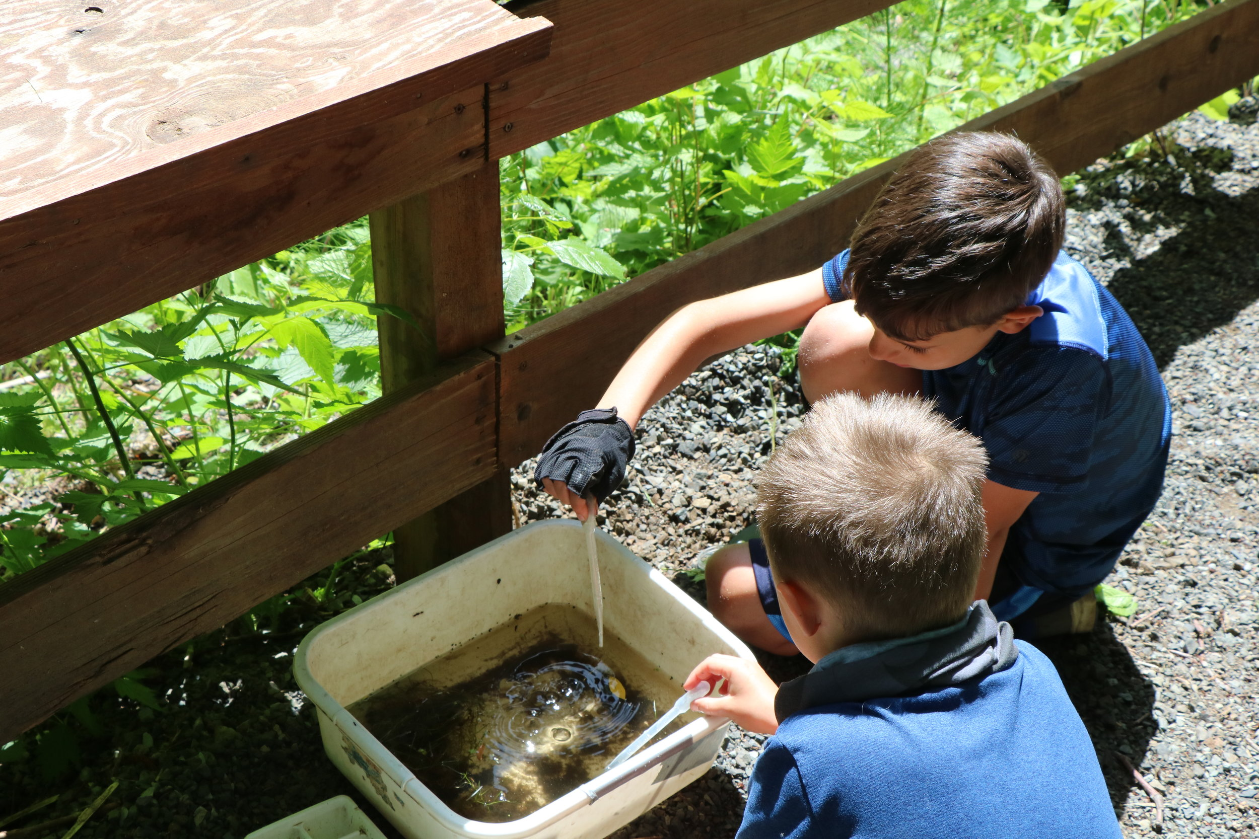 Conducting a Pond Study