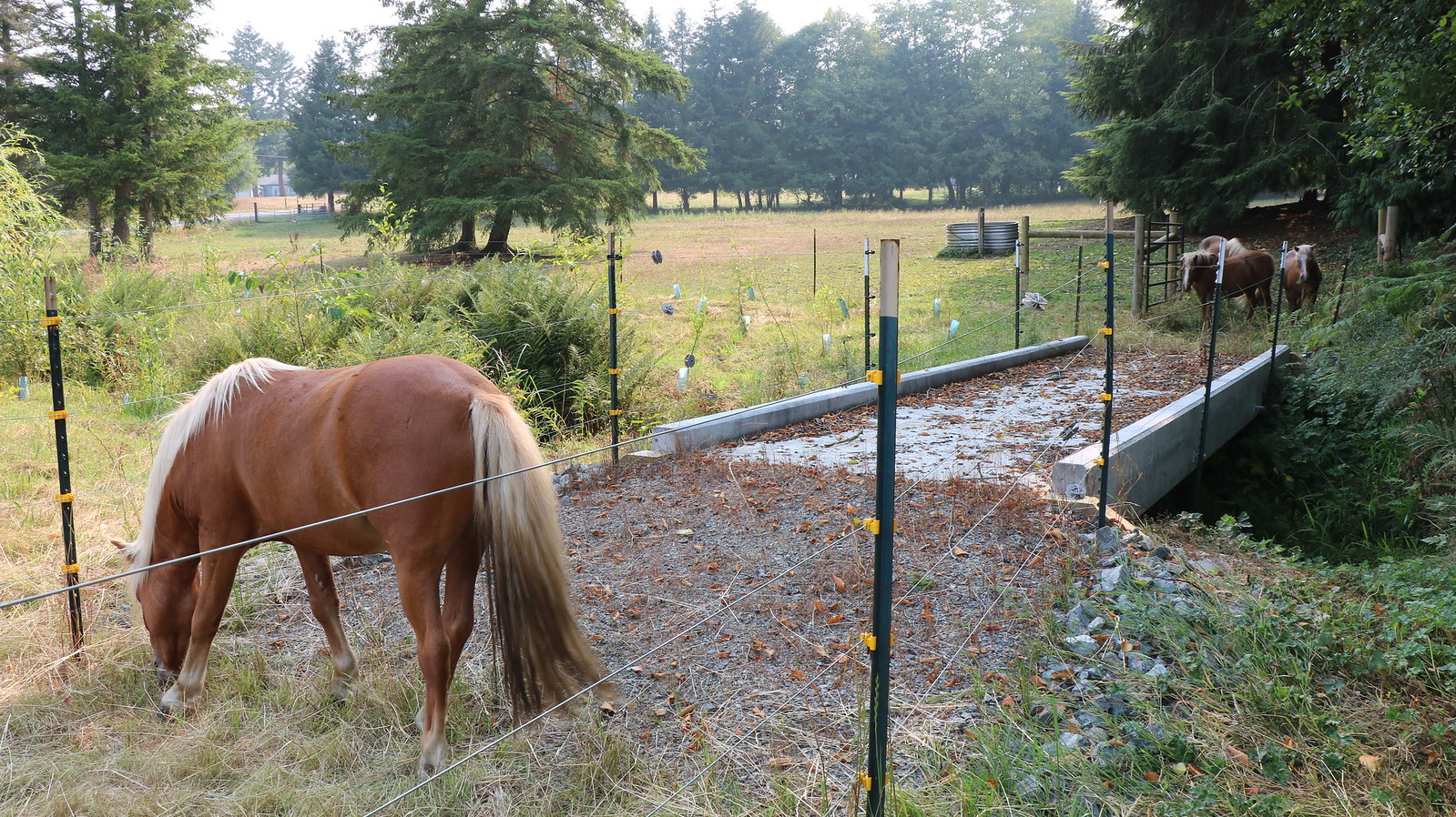 Horses are kept out of the creek with exclusion fencing and a bridge in the Stillaguamish watershed.