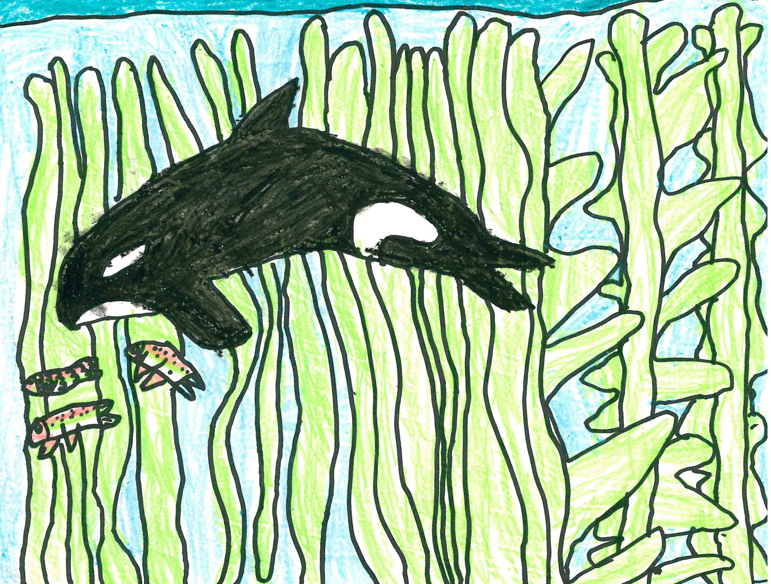 Orca and Kelp by Annalise Buck - 1st Place - Grades K-2