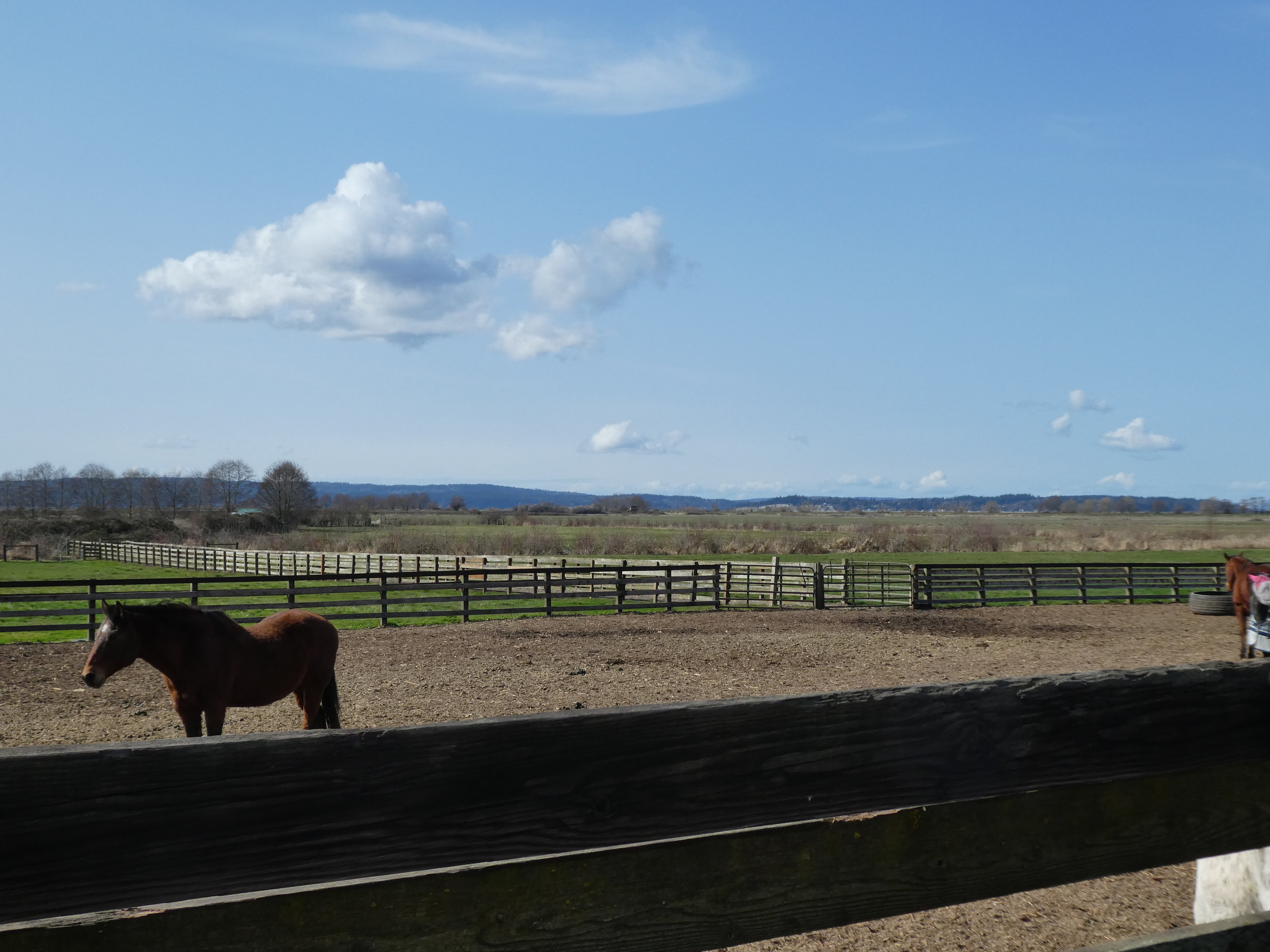 View from outdoor arena to mud-free paddock and green pastures.