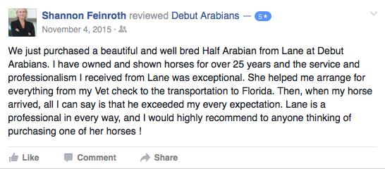 Arabian-Horse-Training-Texas.jpg