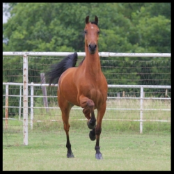 Bruce Almighty (Pension x Sky Chime)