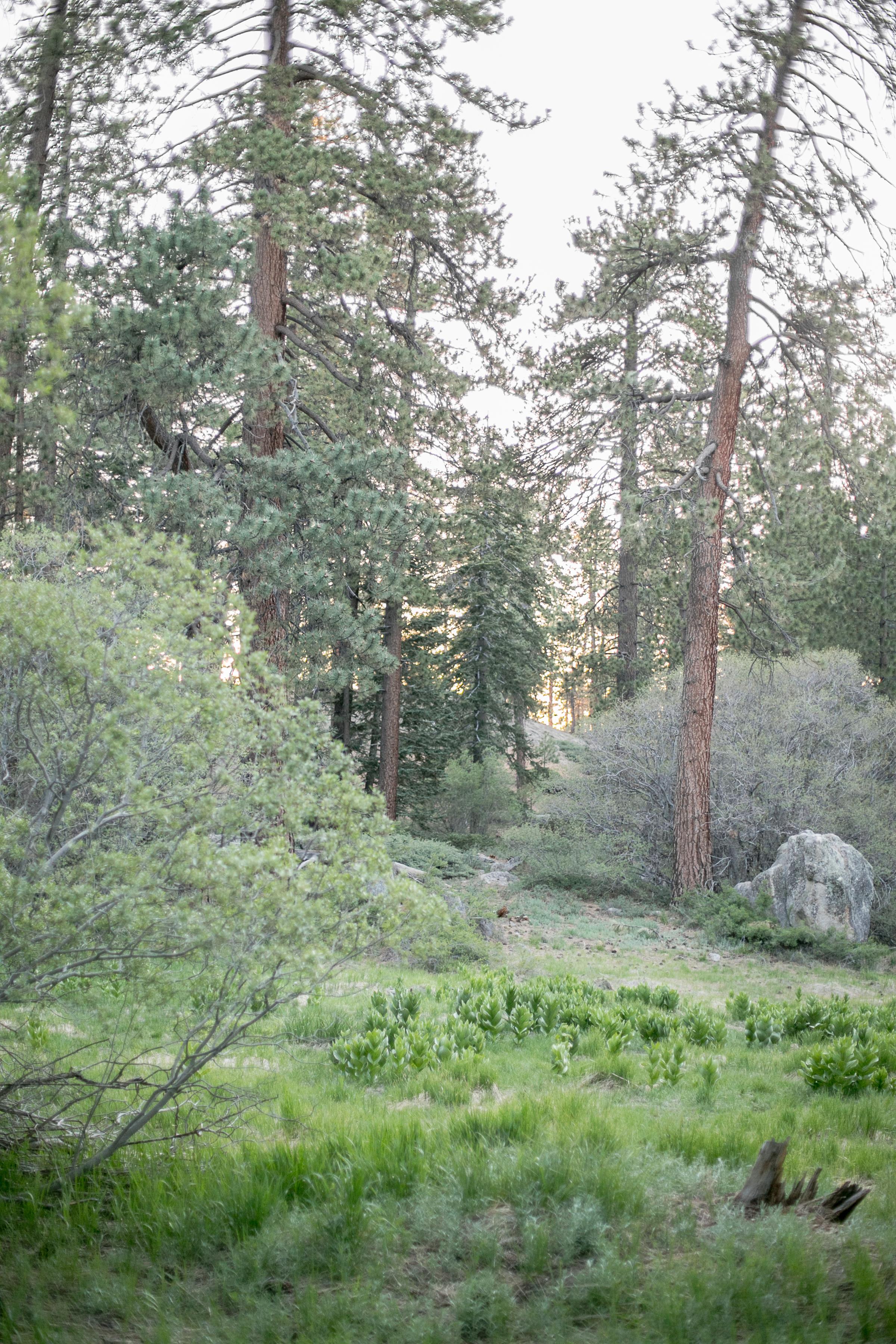 Big Bear_Lake_Camping_Trip_2017-34.jpg