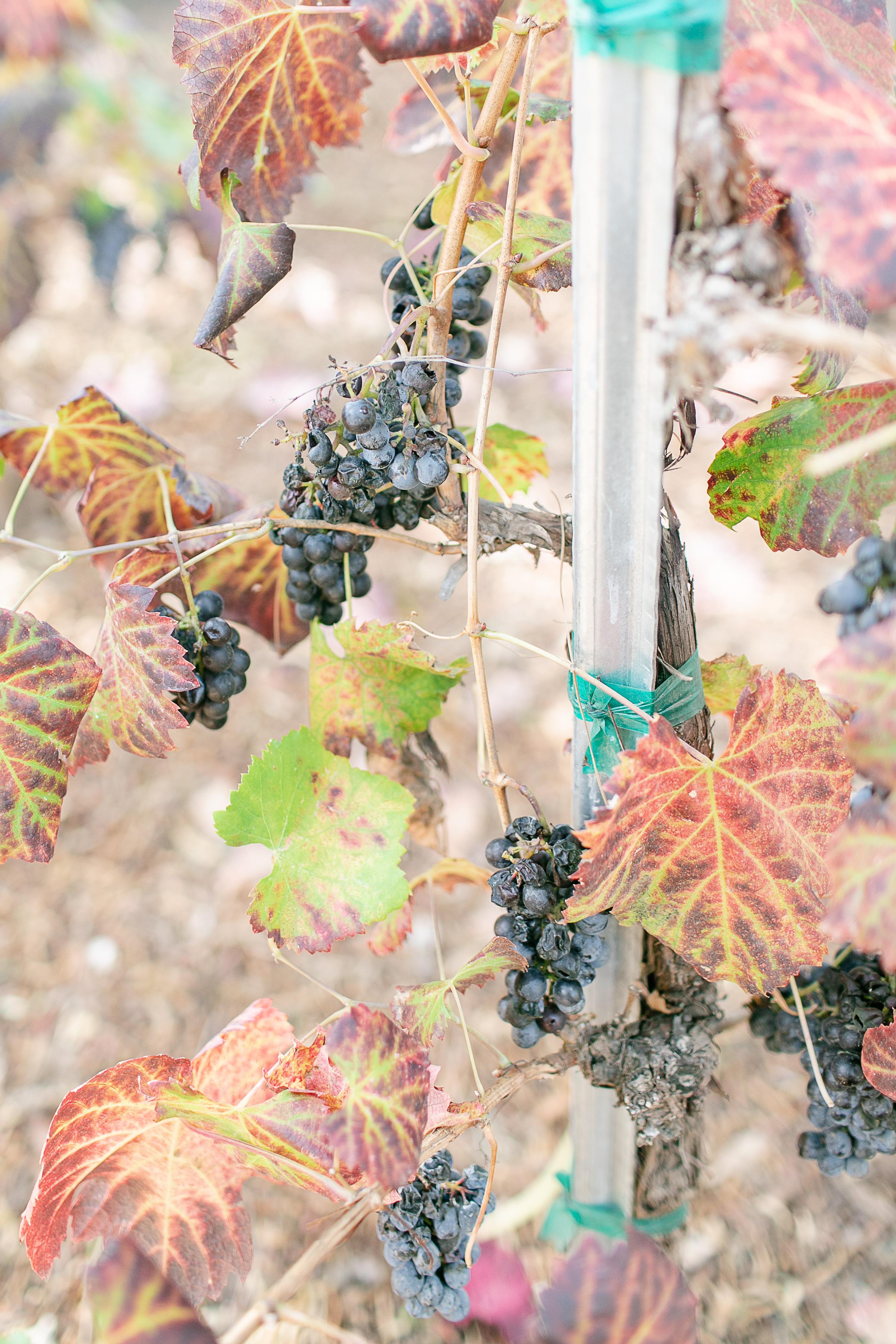 Kathryn and Dustin Temecula Longshadow Ranch Winery Wedding-1.jpg