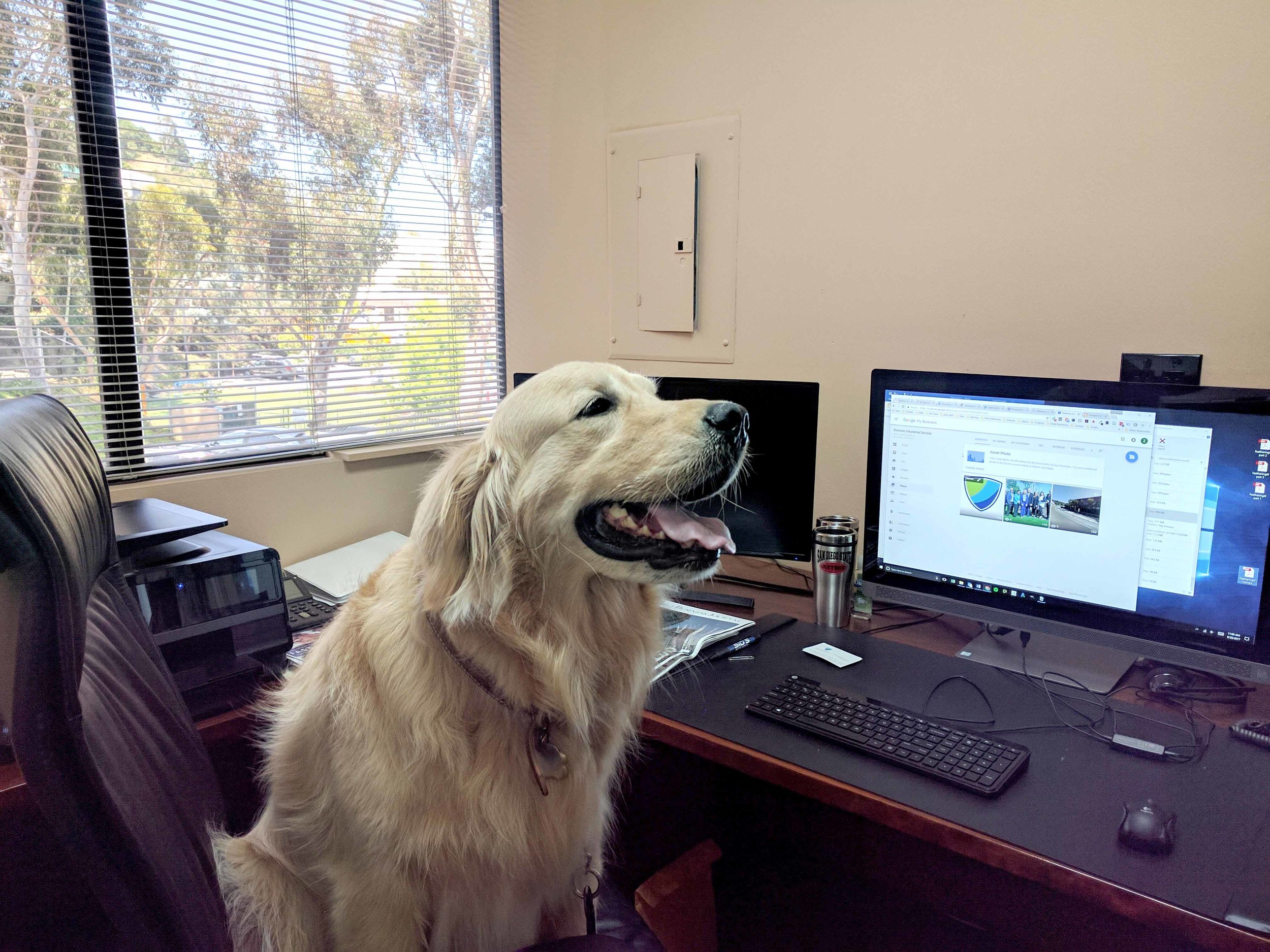 Steve and Marilyn's Dog, Murphy - Working At the Office