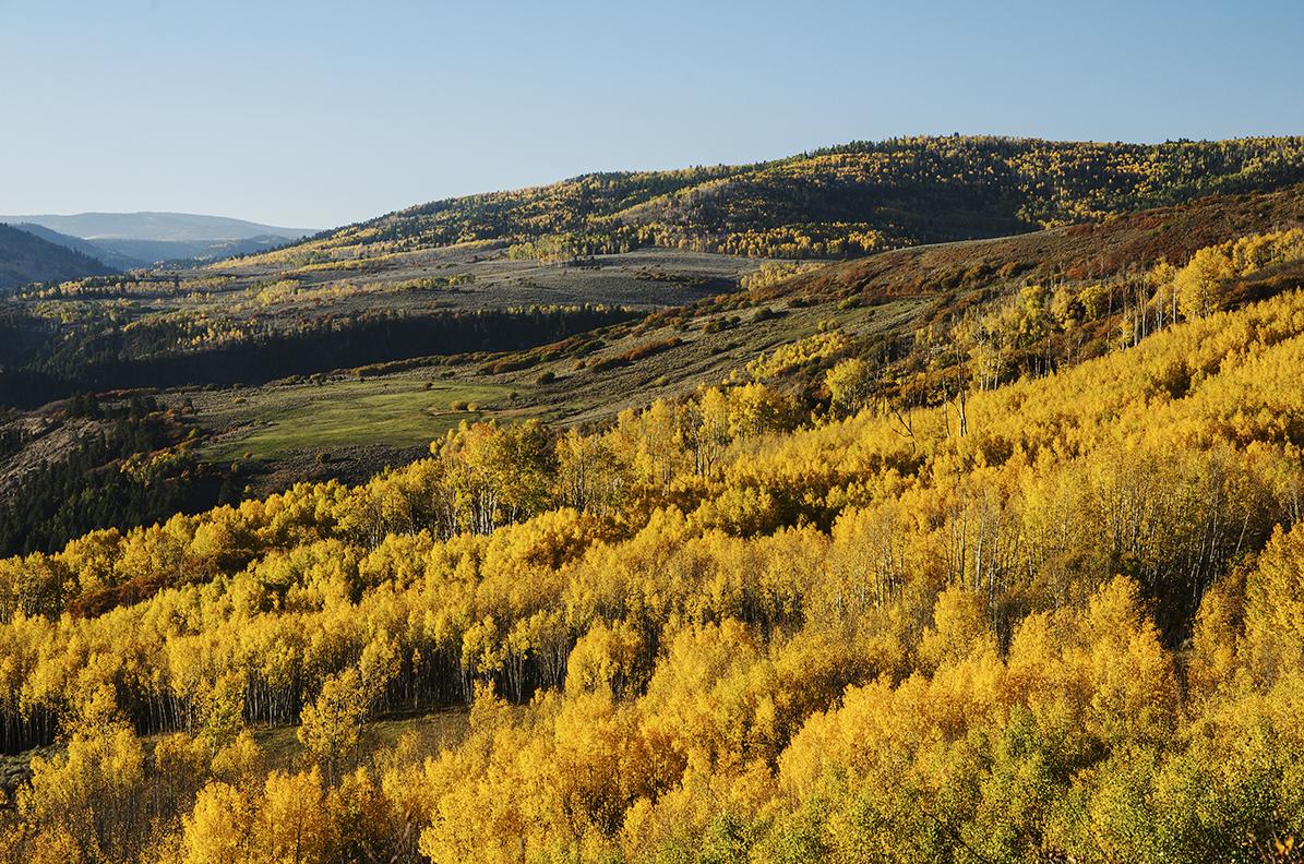 Black Butte Gold_Gun.jpg