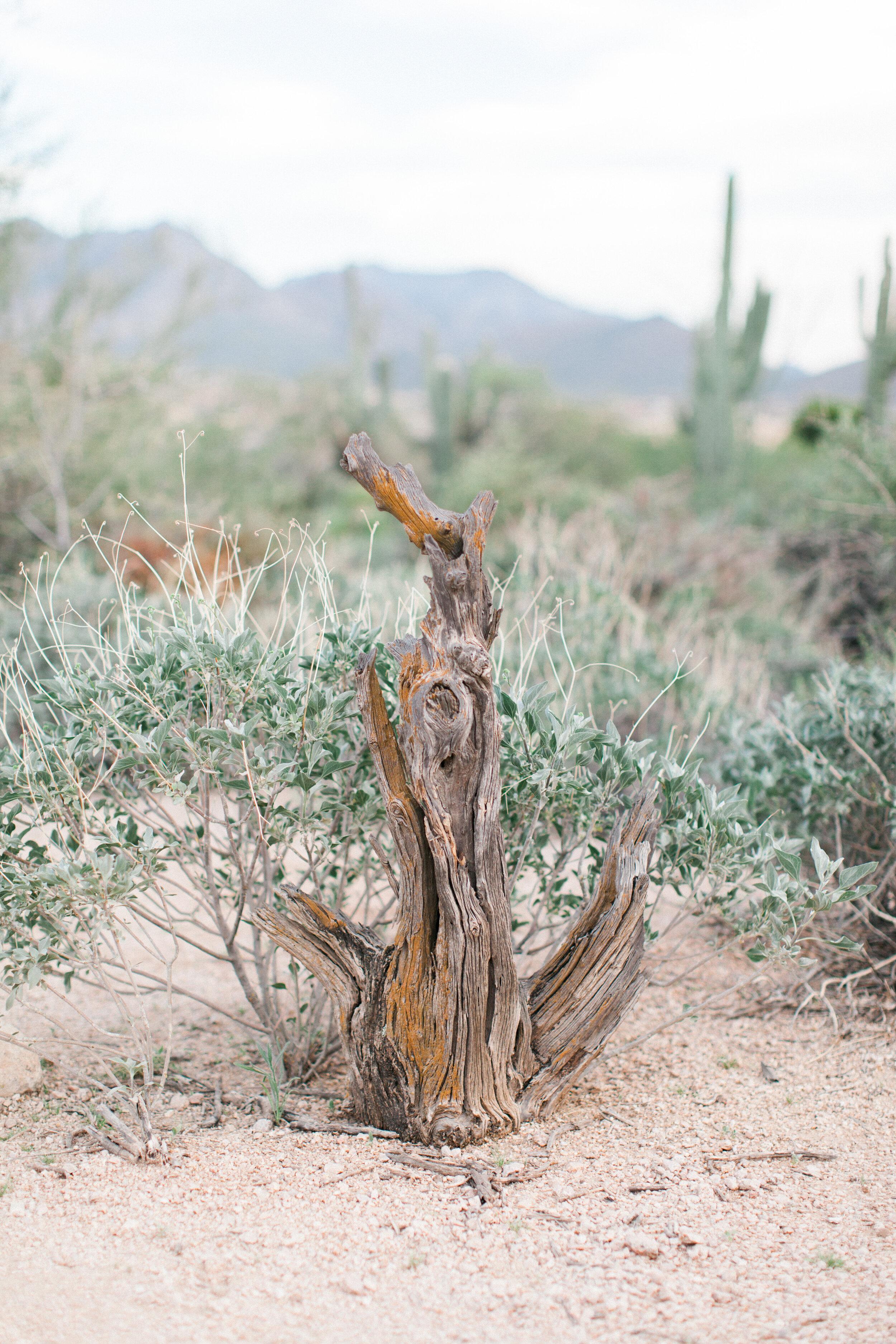Desert Anchor