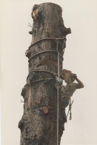 sam tree 3.jpg
