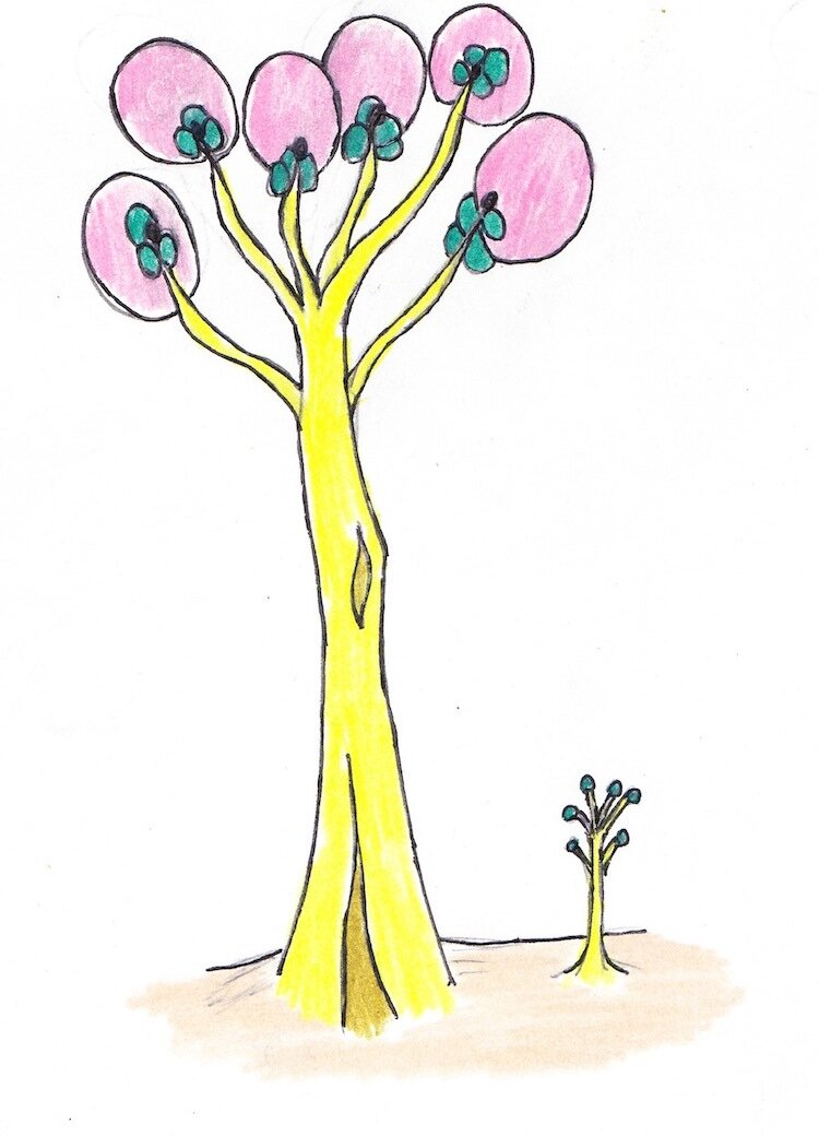 A Full-Grown Figgy Melon Tree and a Young Sprout.jpg