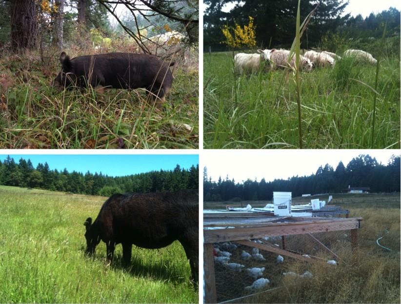 2013 Animals