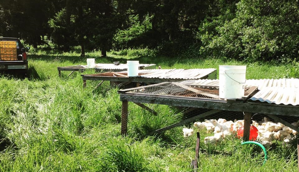 the meat chickens reside in these Bottomless pens which are moved daily to fresh pasture. the pens allow the birds to forage and enable the manure to be spread over the pasture for natural fertilization while protecting from predators and weather.