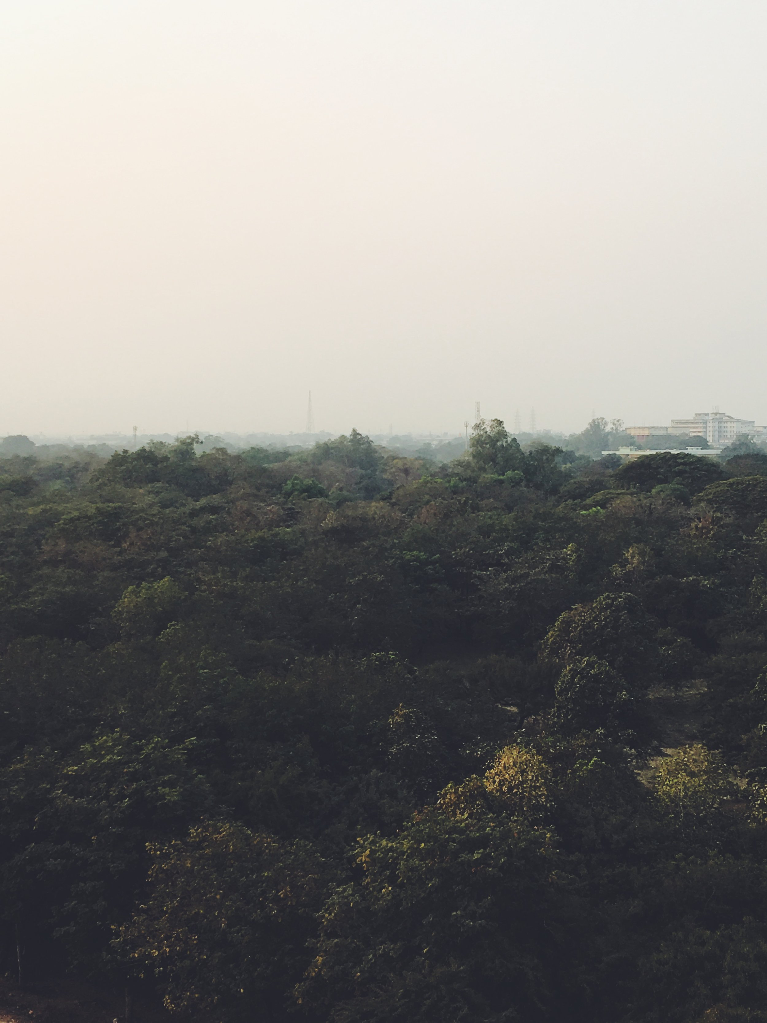 Despite being a steel plant town, Bhilai is filled with lush greenery.