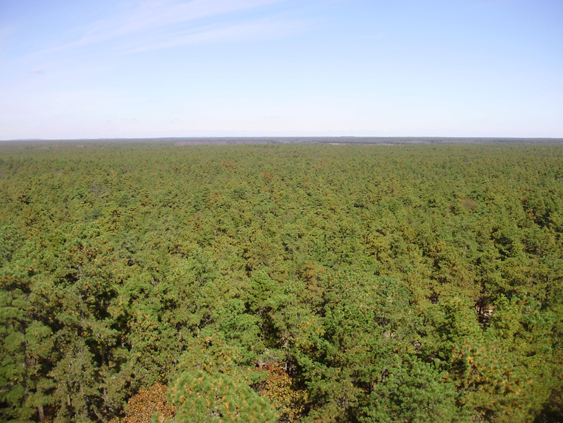 2009-11-04_20-View_north_from_the_top_of_the_Apple_Pie_Hill_fire_tower.jpg