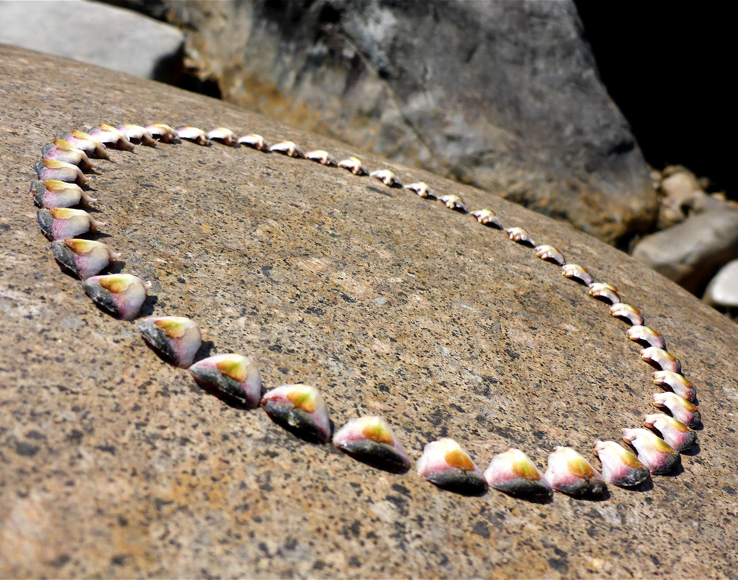 ring on river.jpg