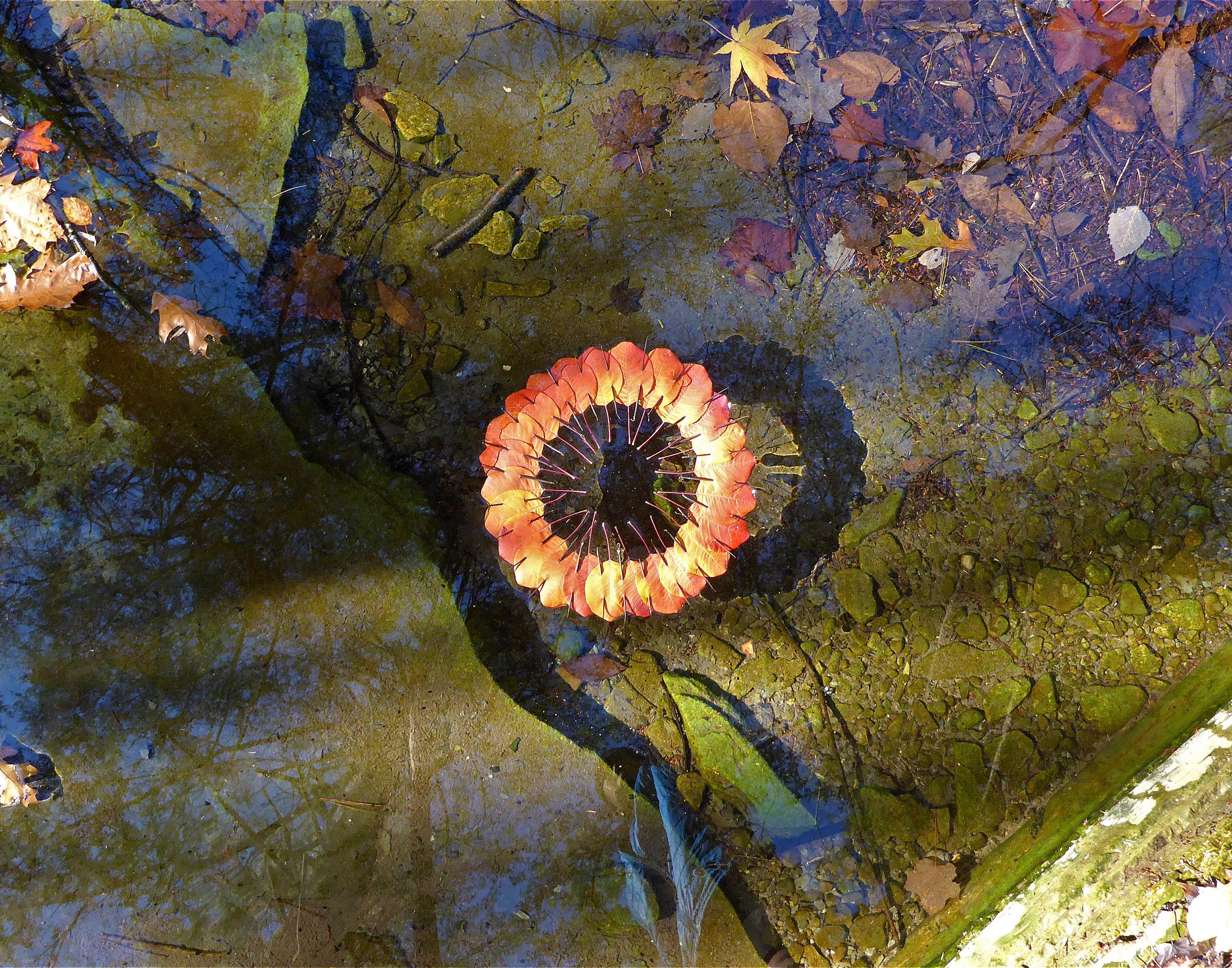 Ring water ithaca.jpg