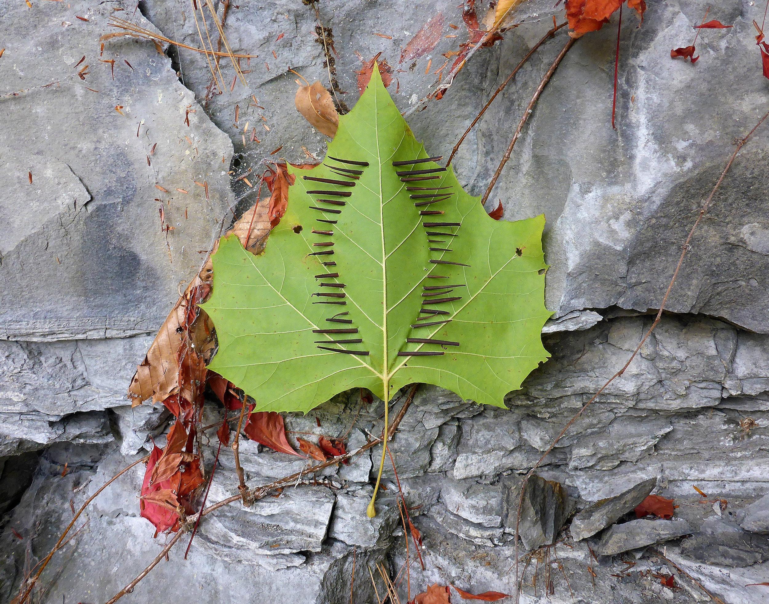 threaded leaf.jpg
