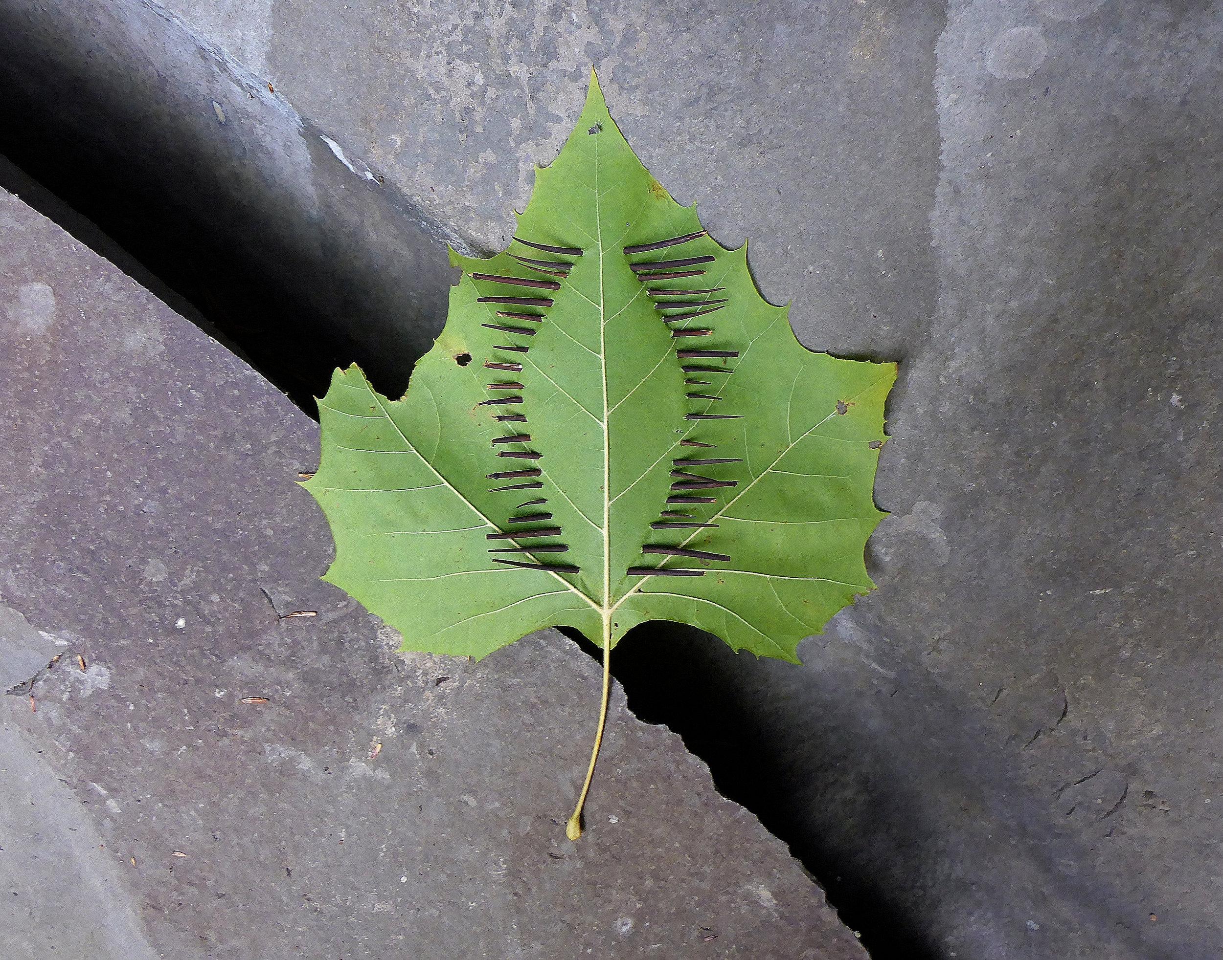 threaded leaf2.jpg