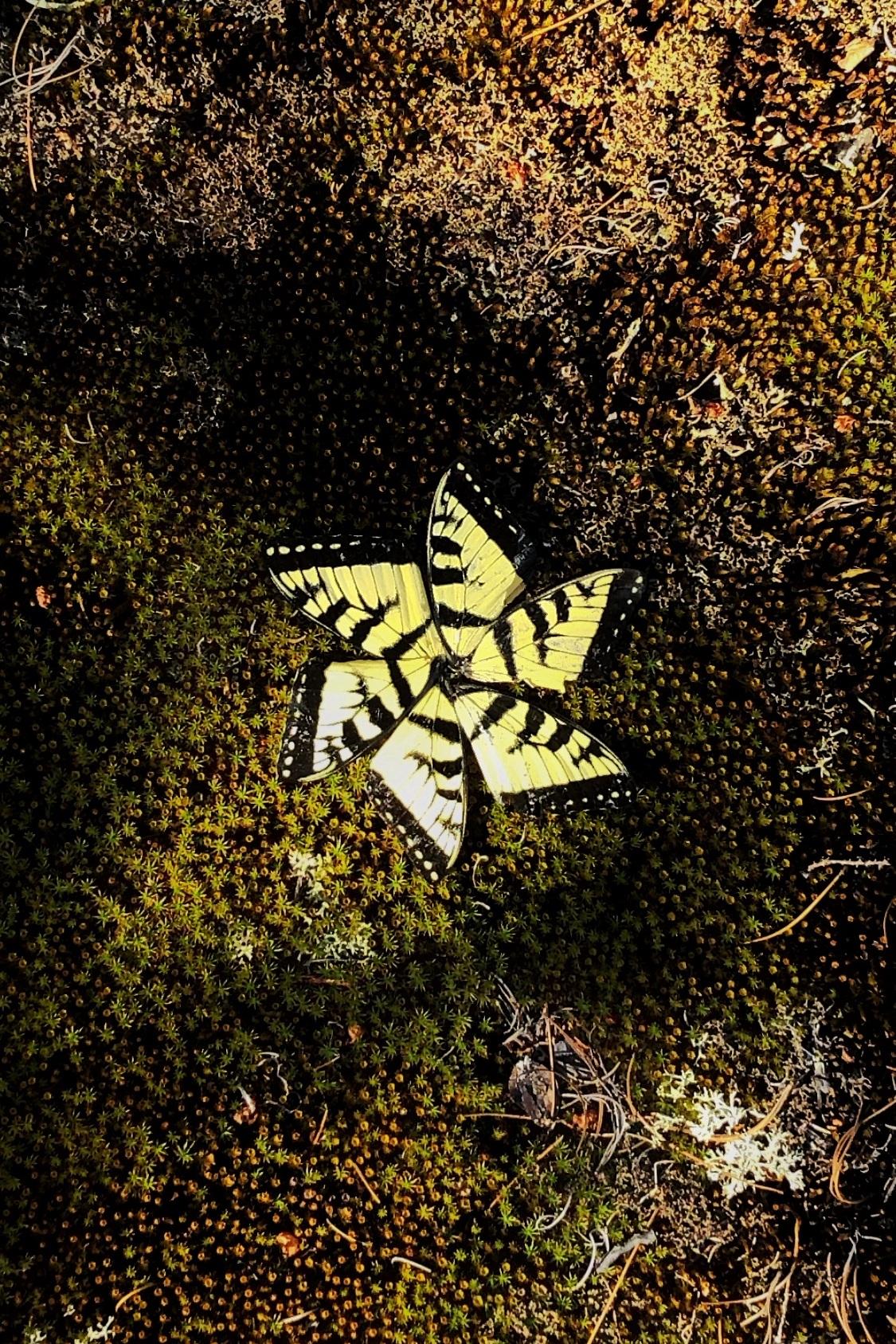 Butterfly Wings on Moss - $120