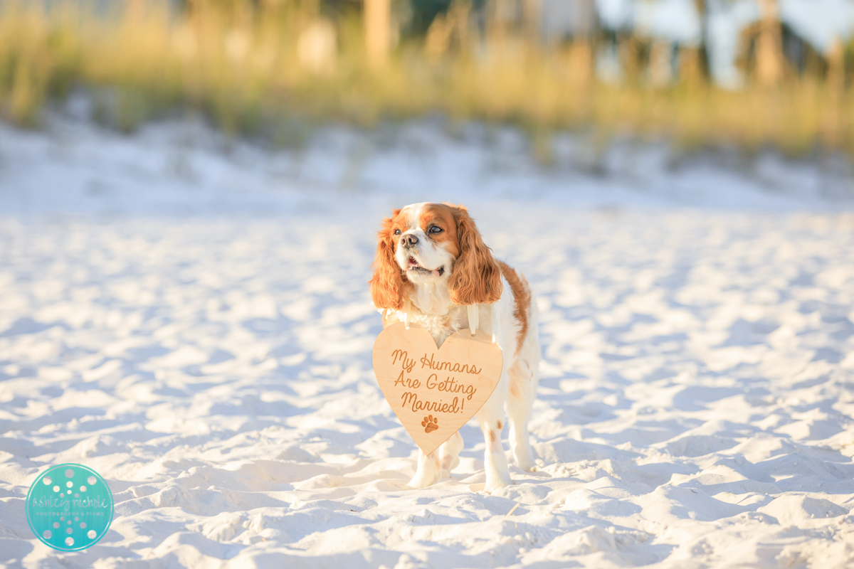 Panama City Beach Wedding Photographer ©Ashley Nichole Photography-155.jpg