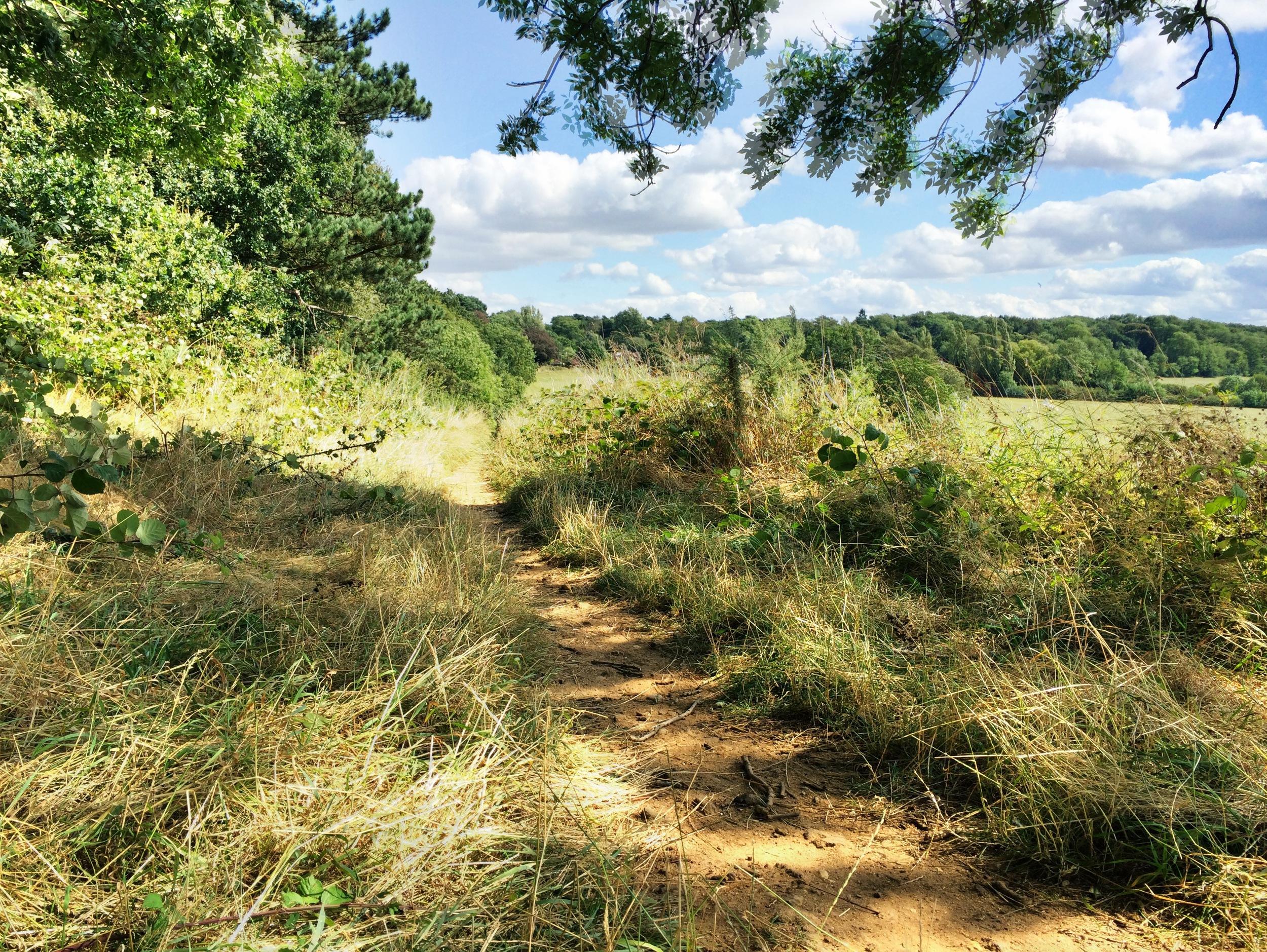Boars Hill Path.JPG