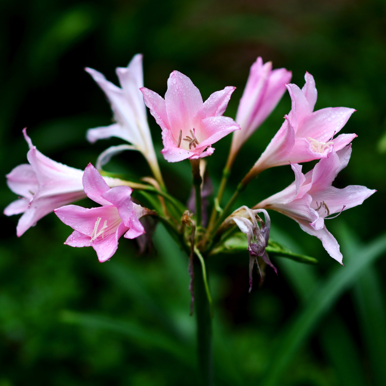 descanso-gardens-michal-pfeil-01.jpg