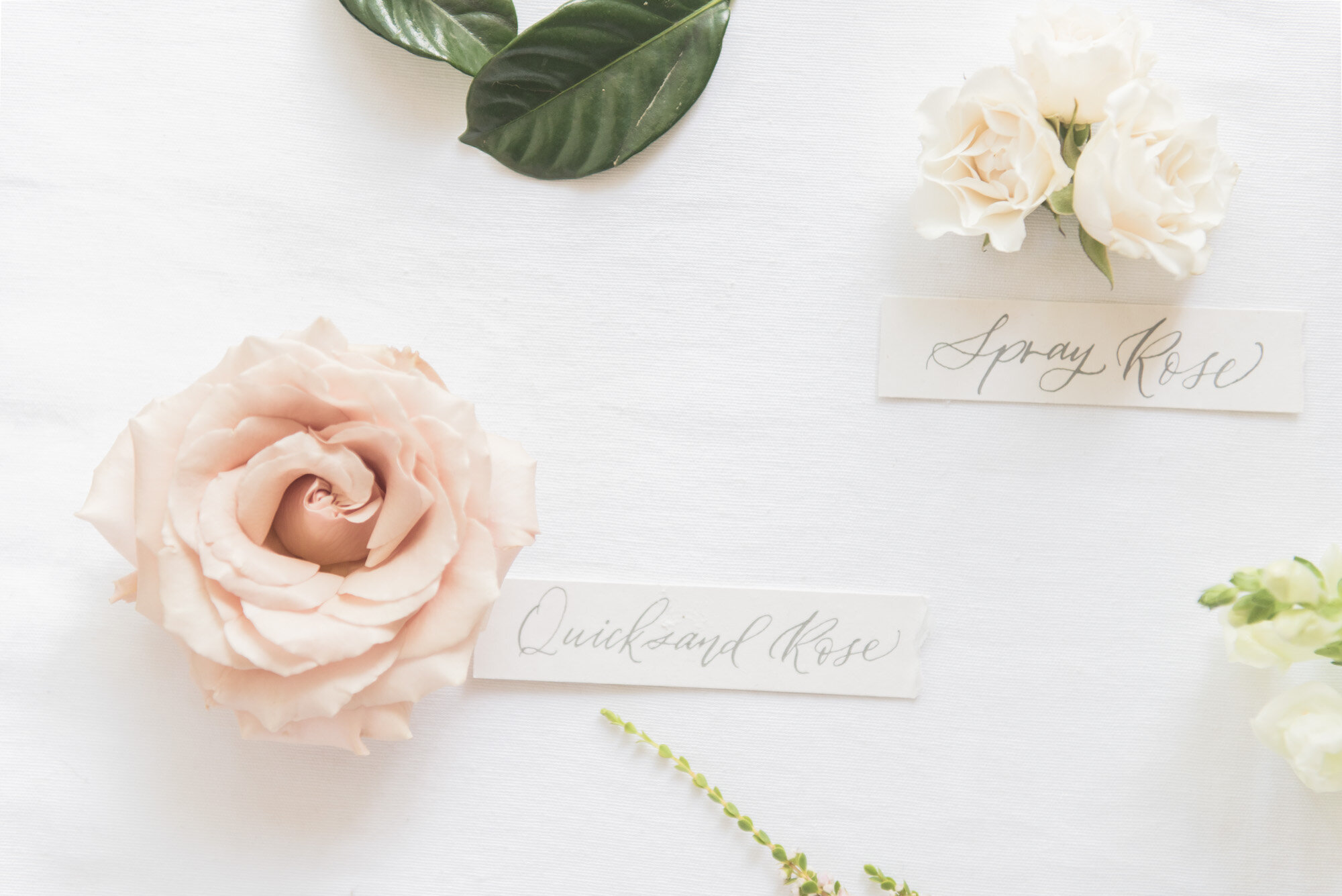 Madalyn Yates Photography Floral Flat Lay