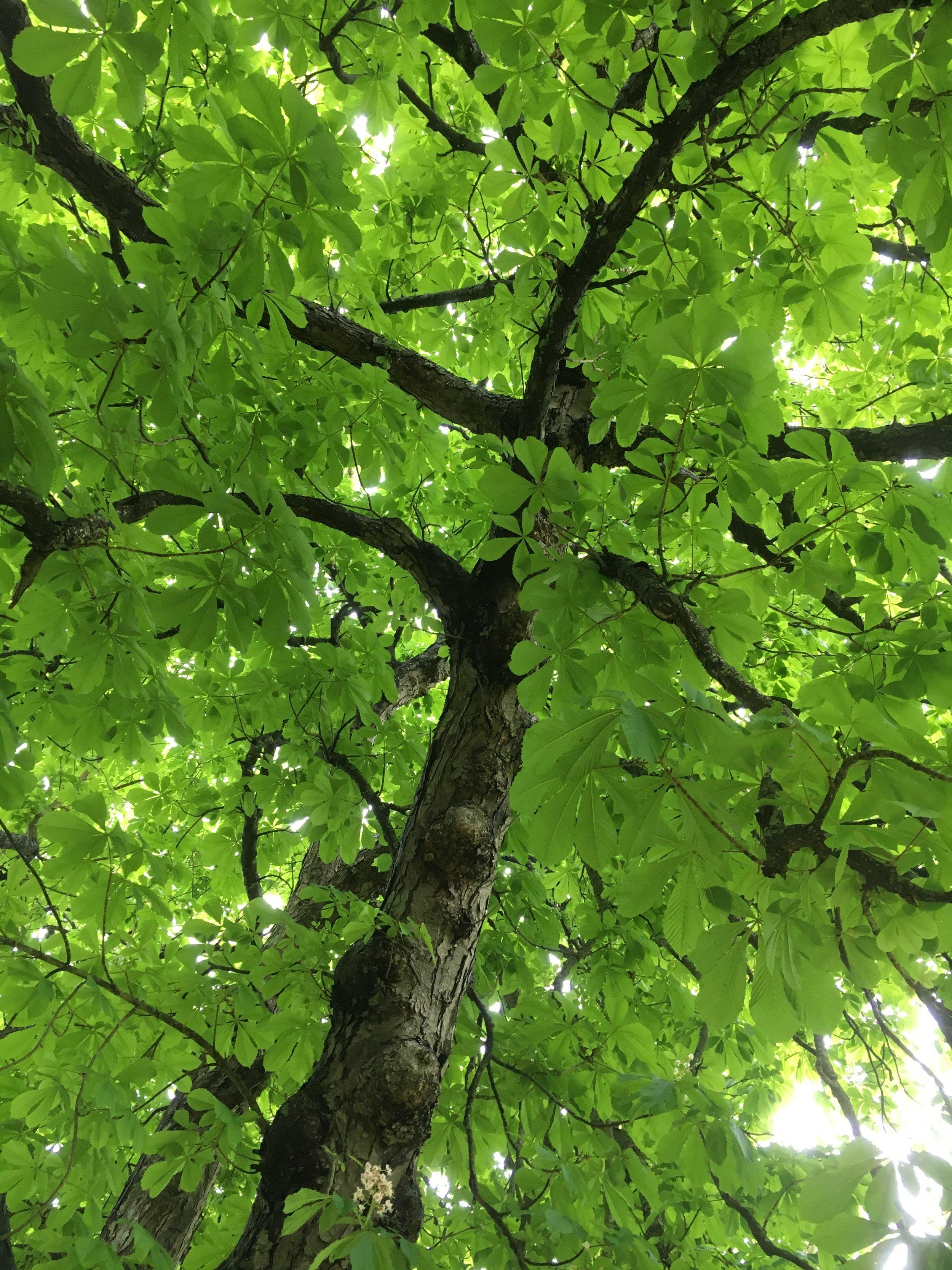 spring_tree_leaves.jpg