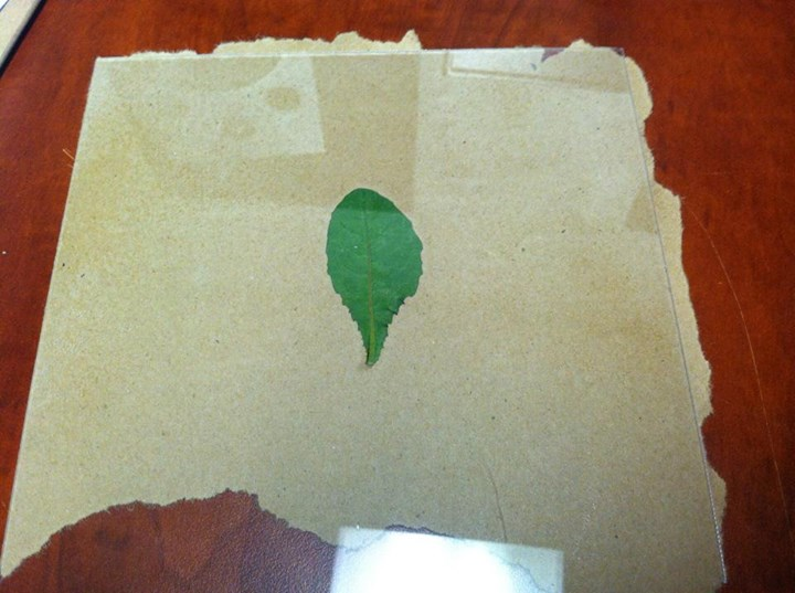 """leaf+kraft paper """"picture disc style"""""""
