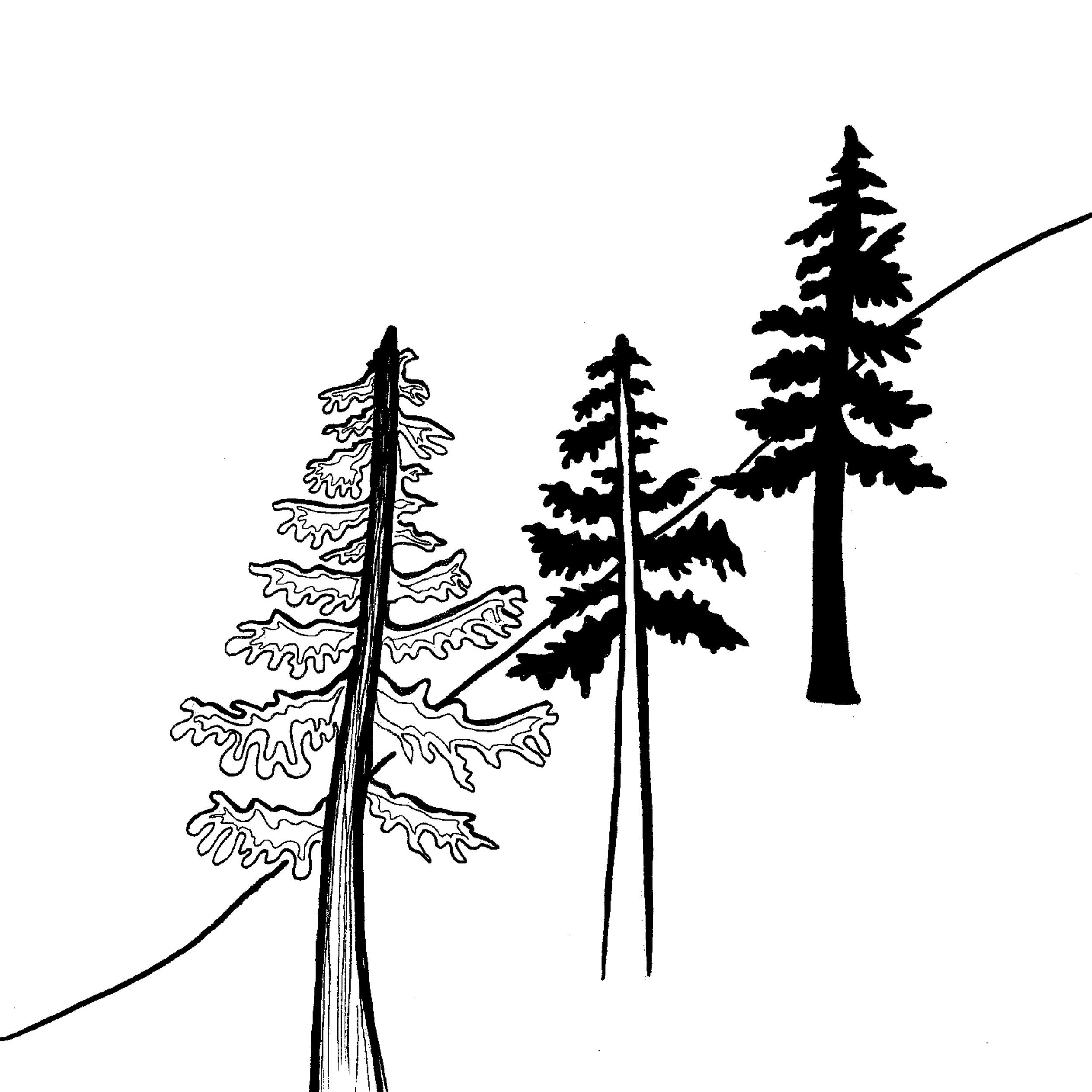 Trees 2014 8.jpg