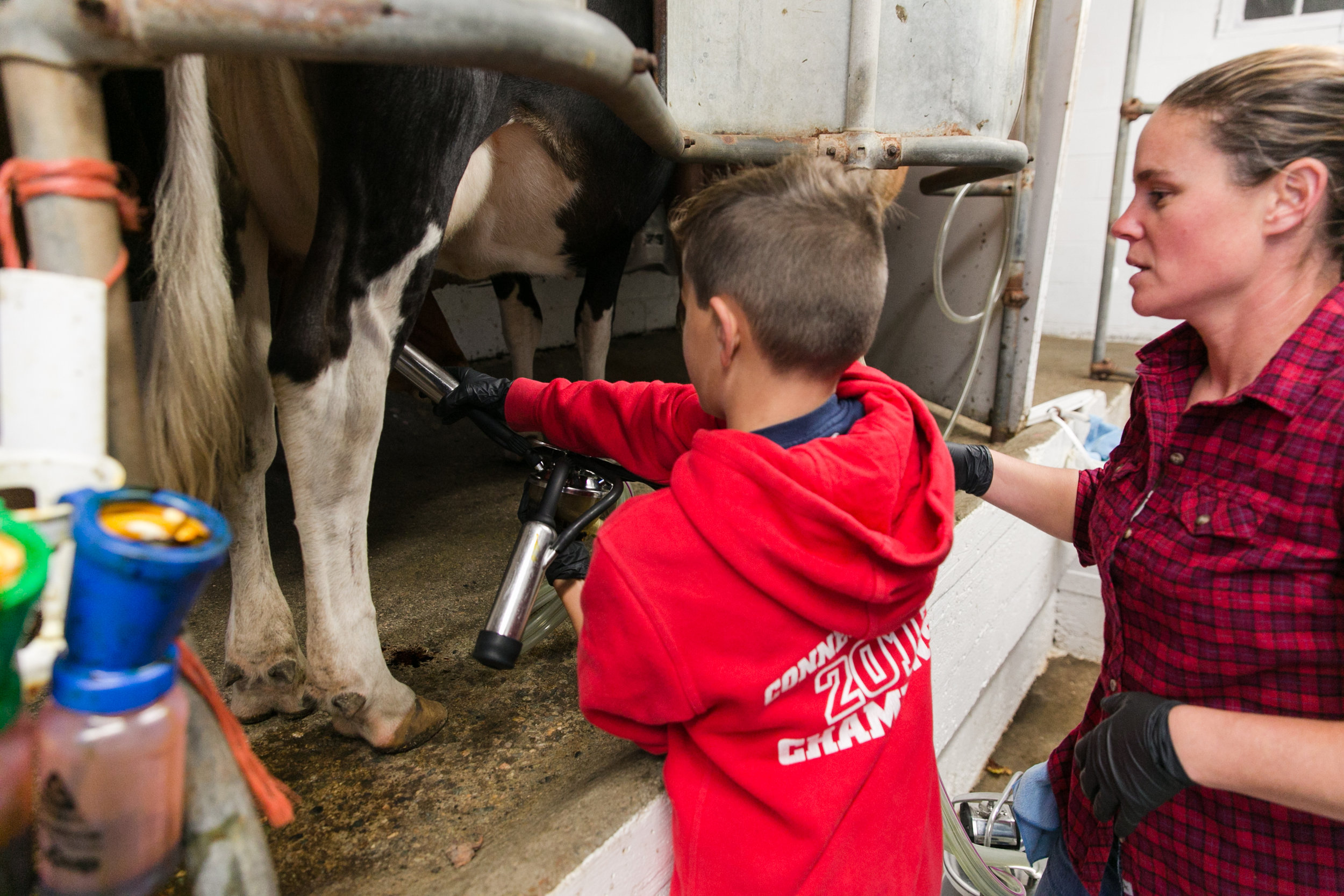 Will Sawin & Brie milking