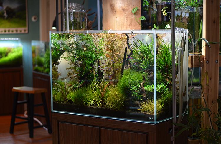 Aquarium-Zen-Seattle-Fish-Store-Nature-Aquarium-Display