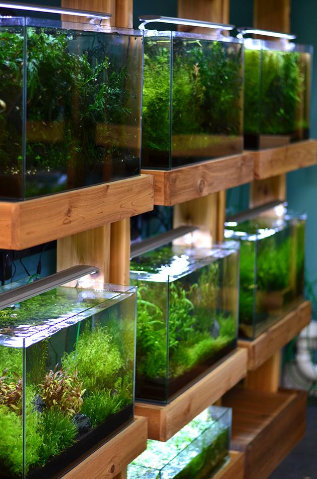 Aquarium-Zen-Seattle-Fish-Store-Aquariums