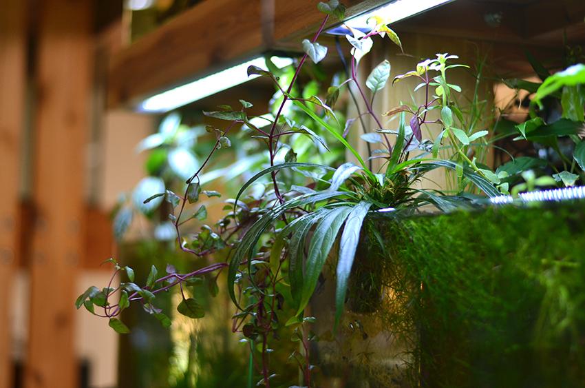overhanging plants.jpg
