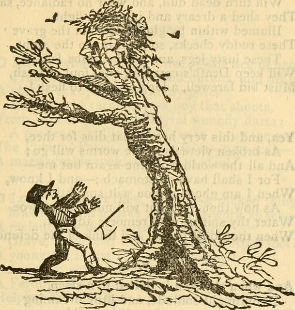This is not Ronni Bennett! It's a guy in love with an elder tree, I think.